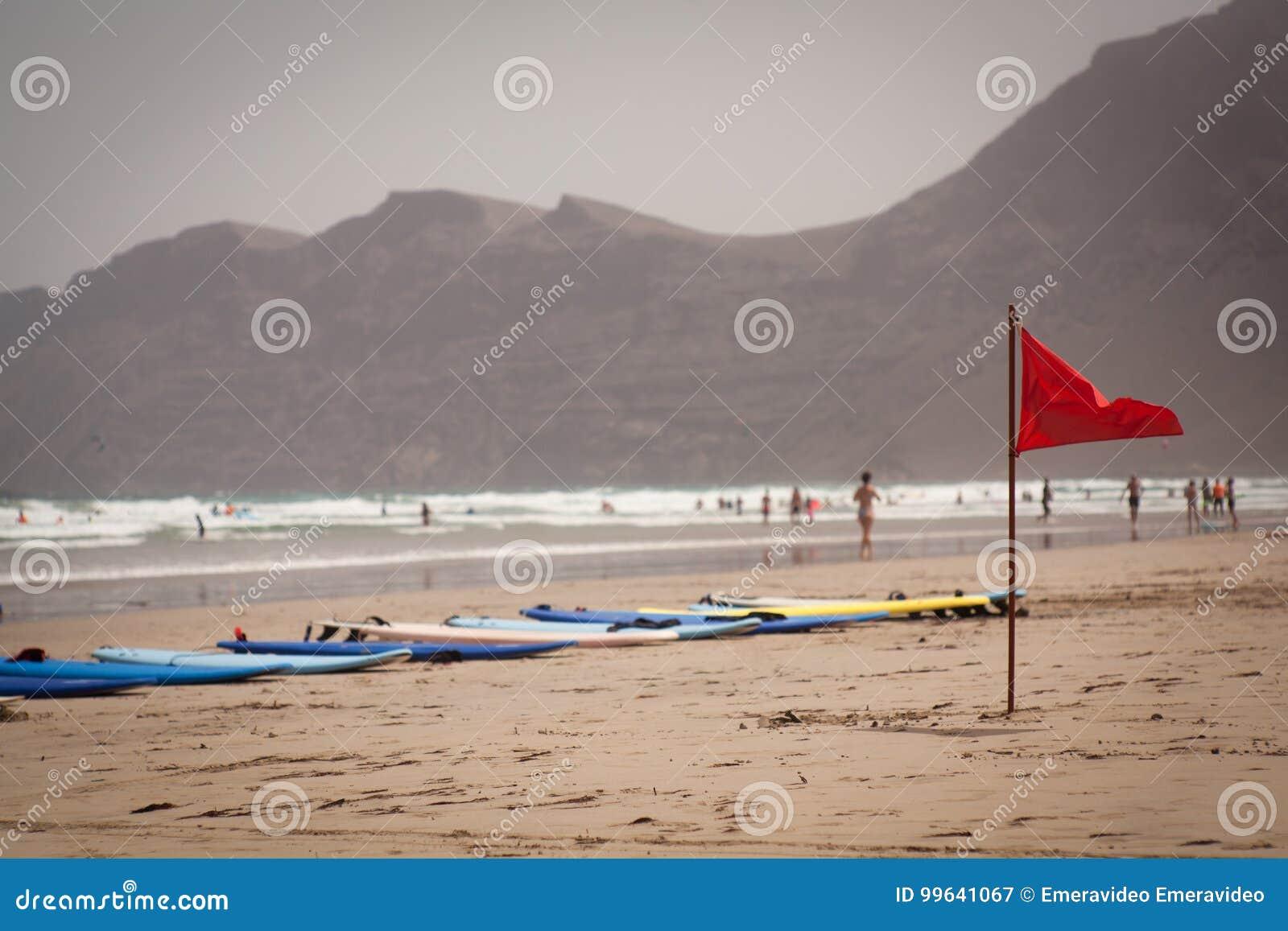 Canário de Lanzarote da praia de Famara