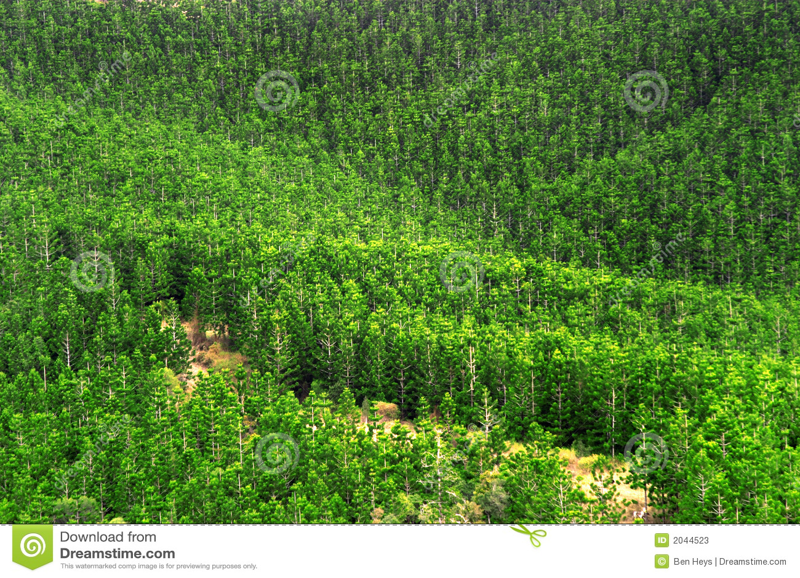 Pine Lumber Wood Shafts From Merlin Archery Ltd Wood