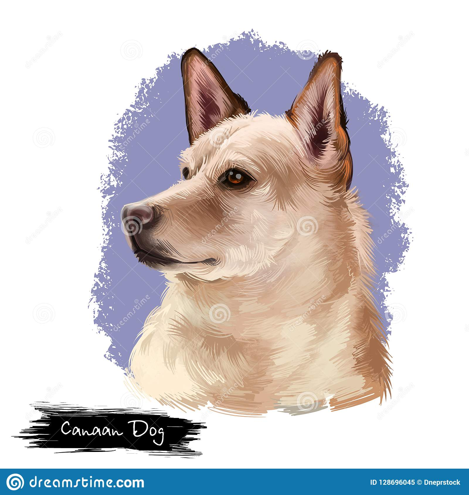 27+ Anjing korean jindo terupdate