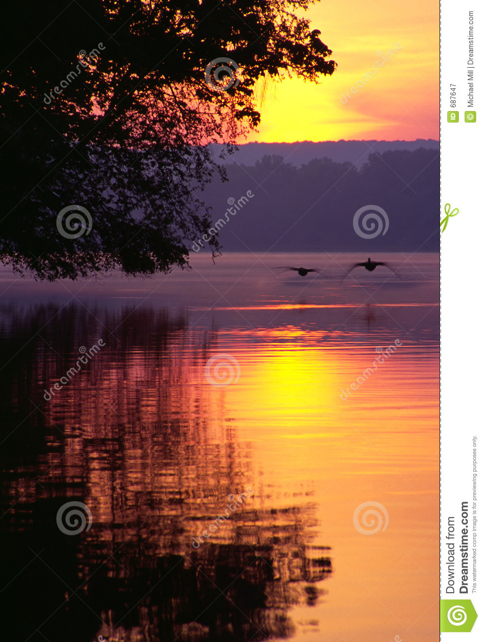 Canada Goose womens online discounts - Canada Geese Landing On Lake At Sunrise Royalty Free Stock ...