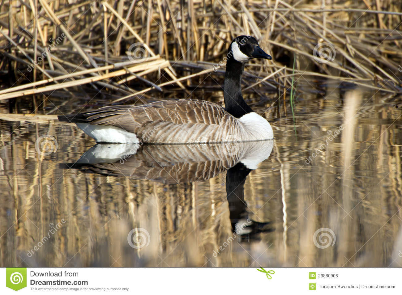 canada goose swot Canada goose is a company that had started in a small warehouse in toronto, ontario, canada in 1957 by a guy named sam tick, who was a cutter at other factories when sam tick started the company, it was originally called metro sportswear ltd.