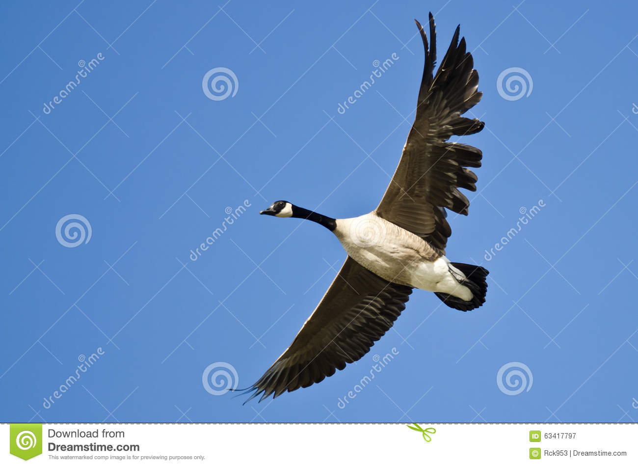 how to clean canada goose