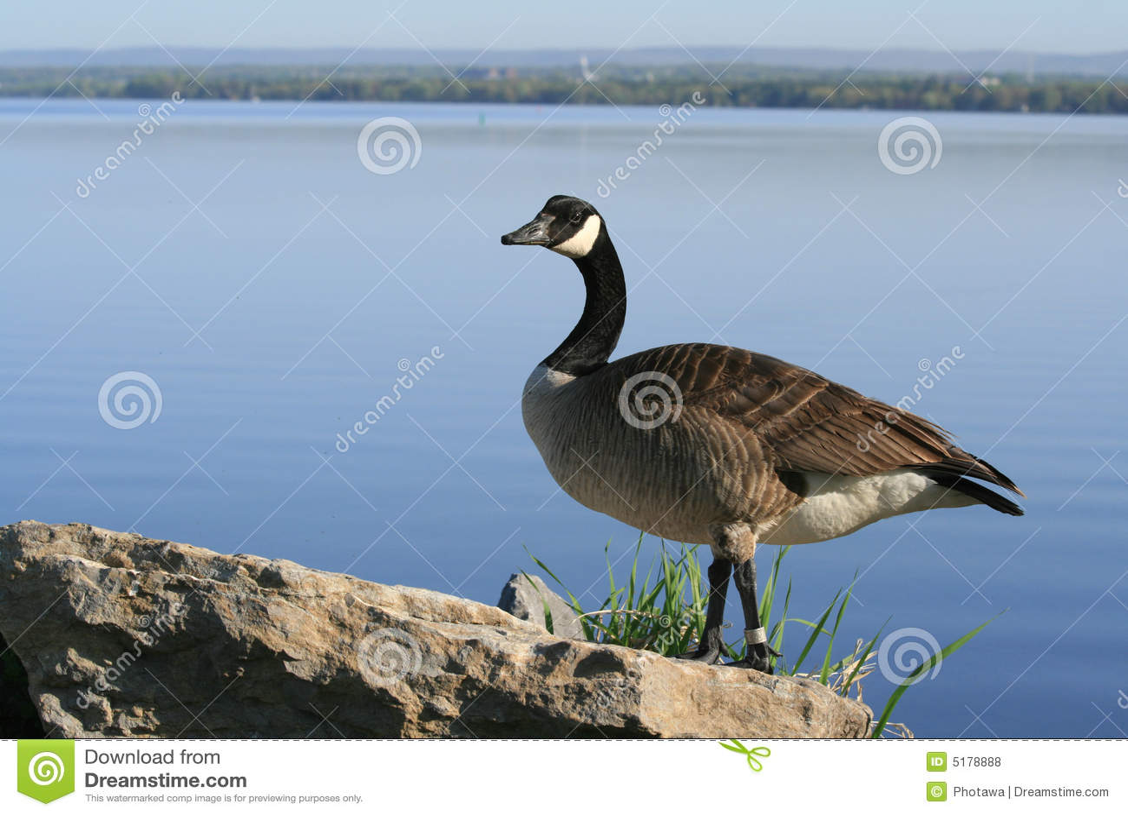 canada goose store ottawa