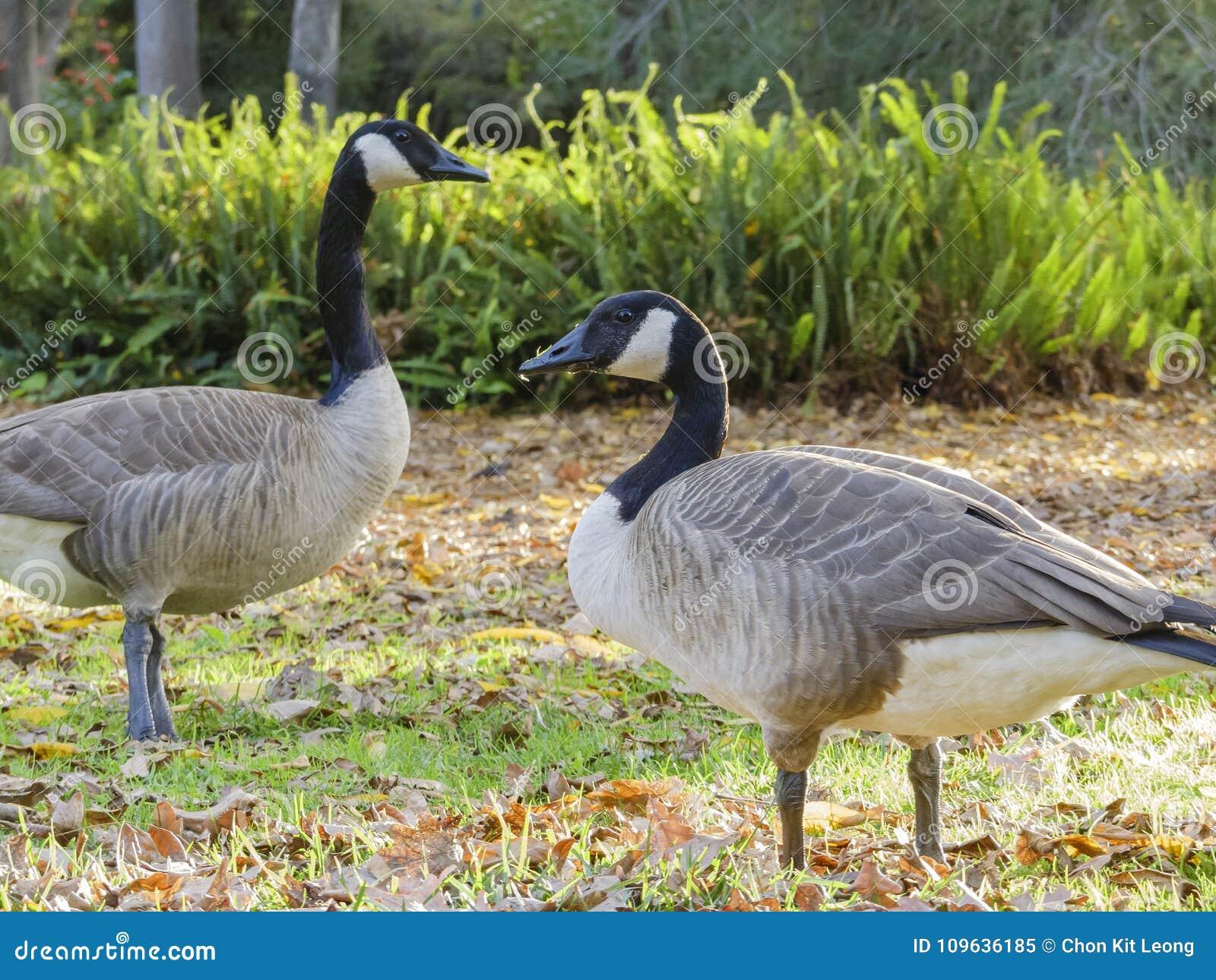 canada goose shop los angeles