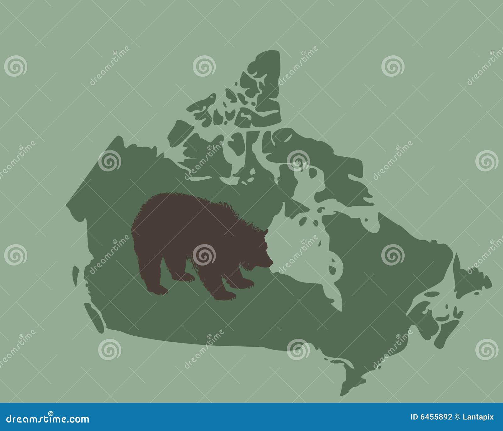 Canada niedźwiedzia grizzly