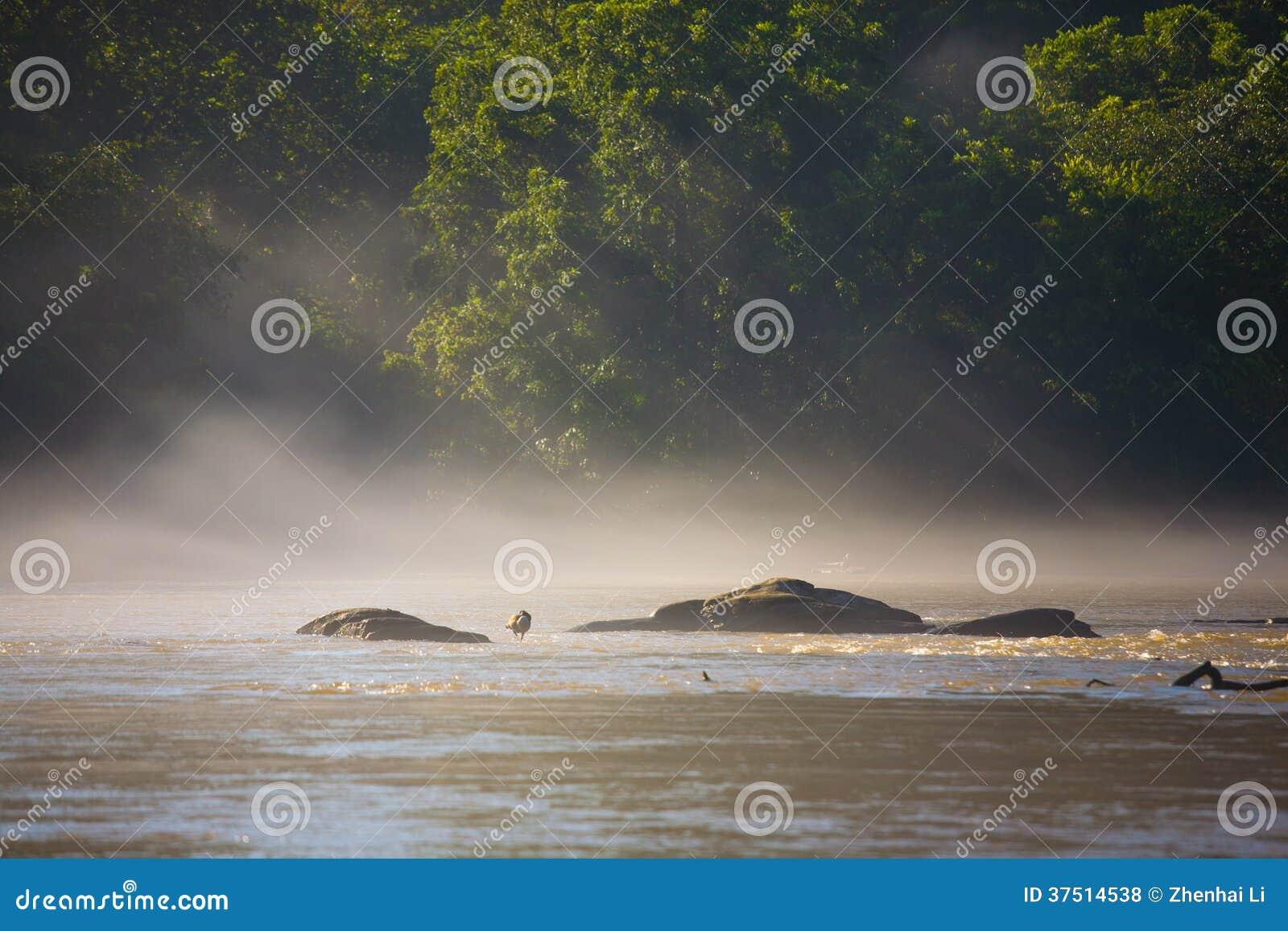 Canadensis Branta στον ποταμό Chattahoochee στο βάτραχο