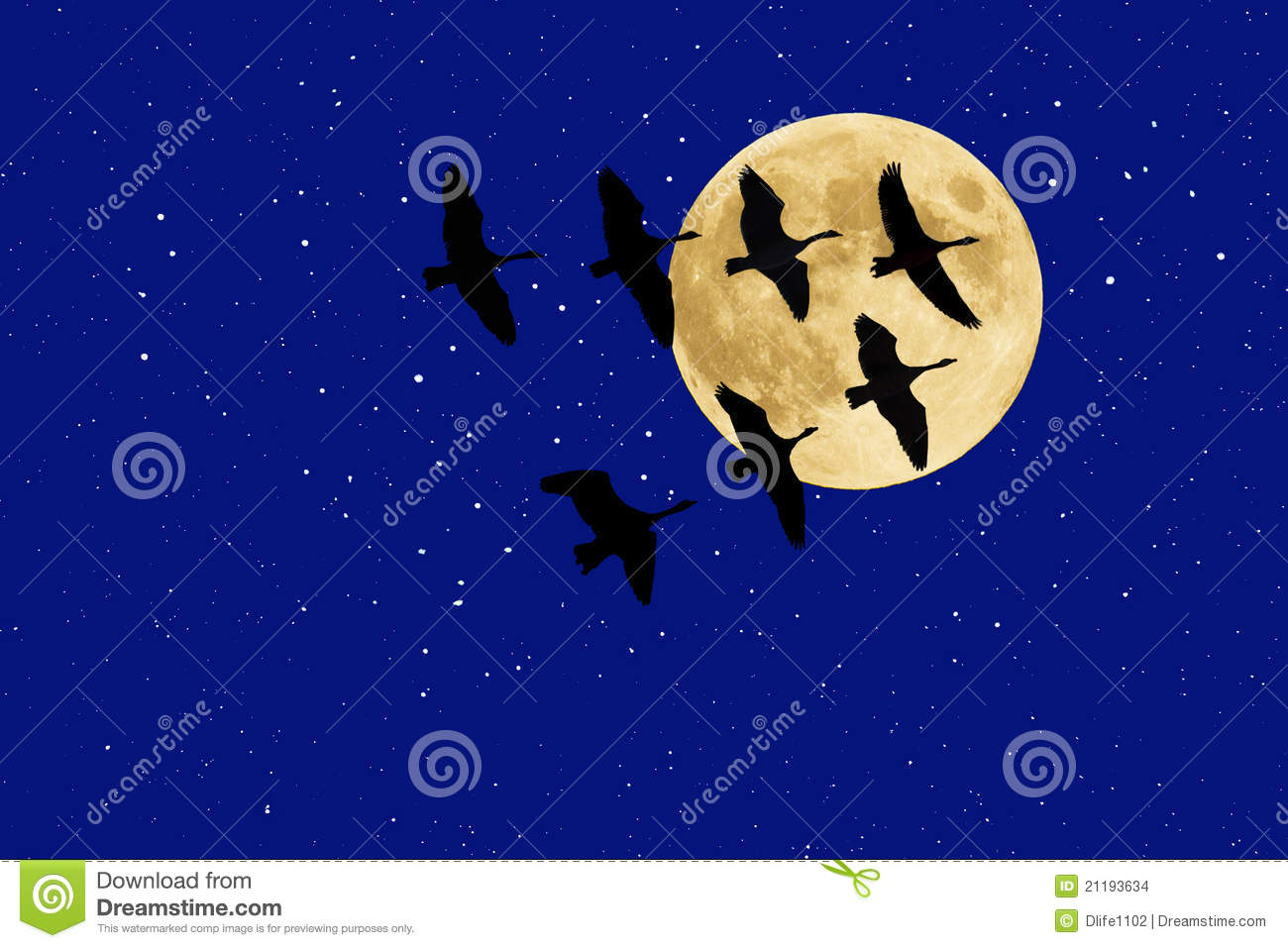 Canadian Geese beneath Full Moon and Stars