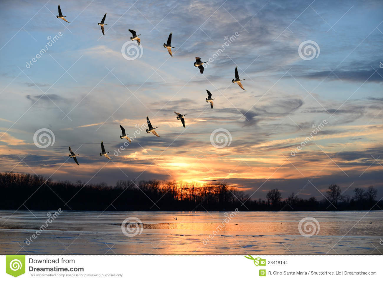 Canadian Geese Flying In V Formation Stock Images - Image ...