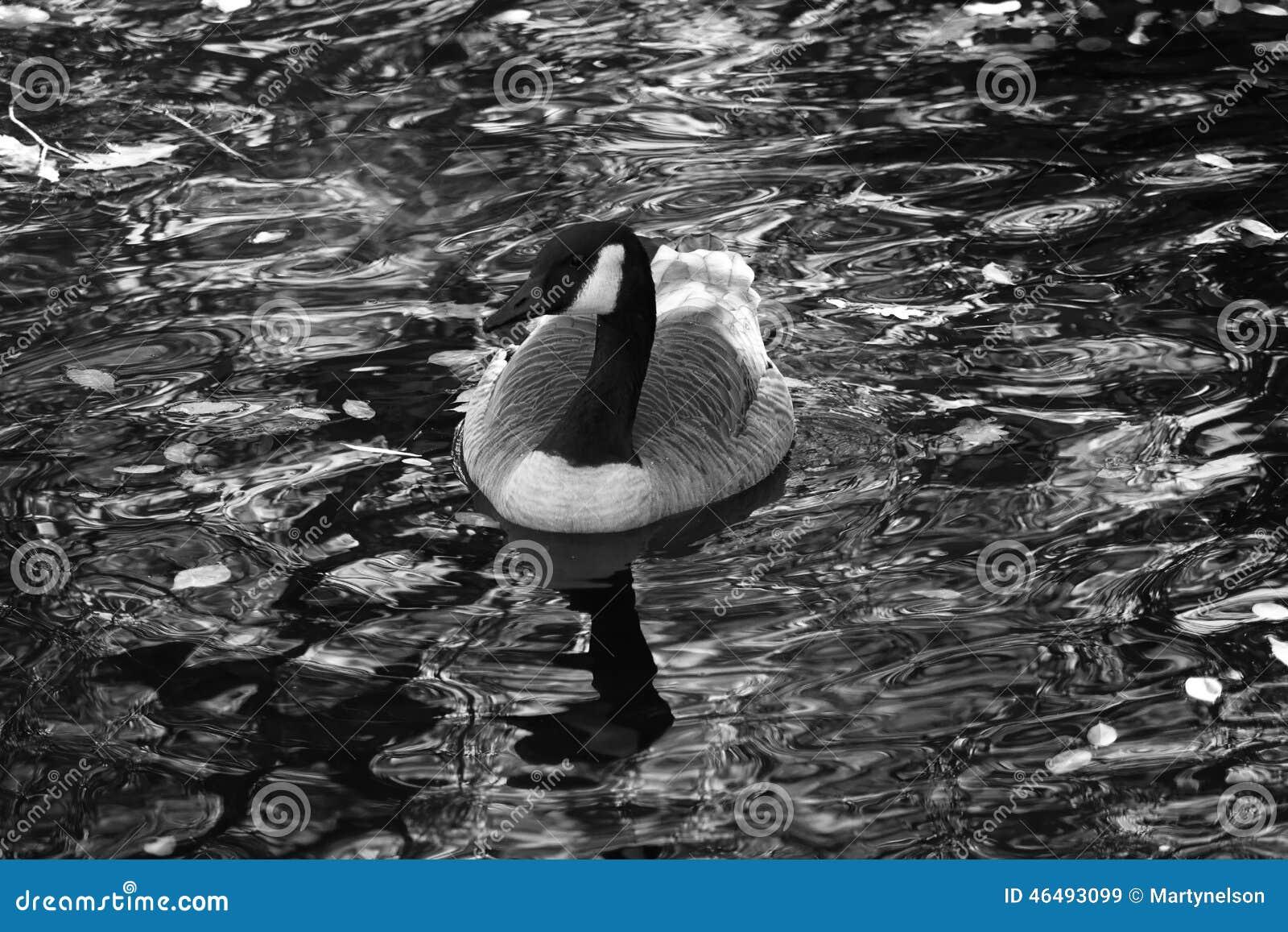 canada goose shop miami