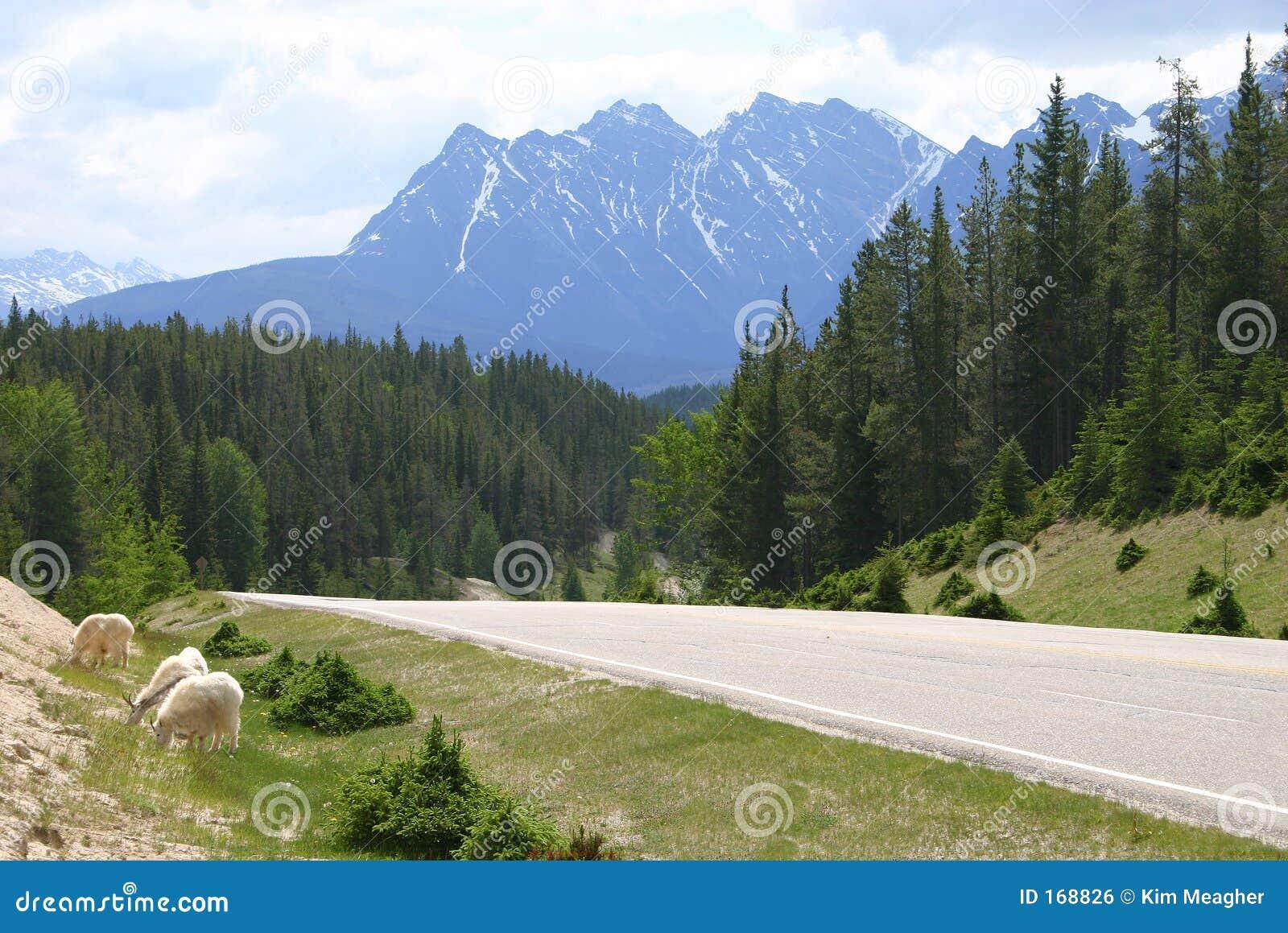 Download Canadian Rockies II stock photo. Image of mountainous, travel - 168826