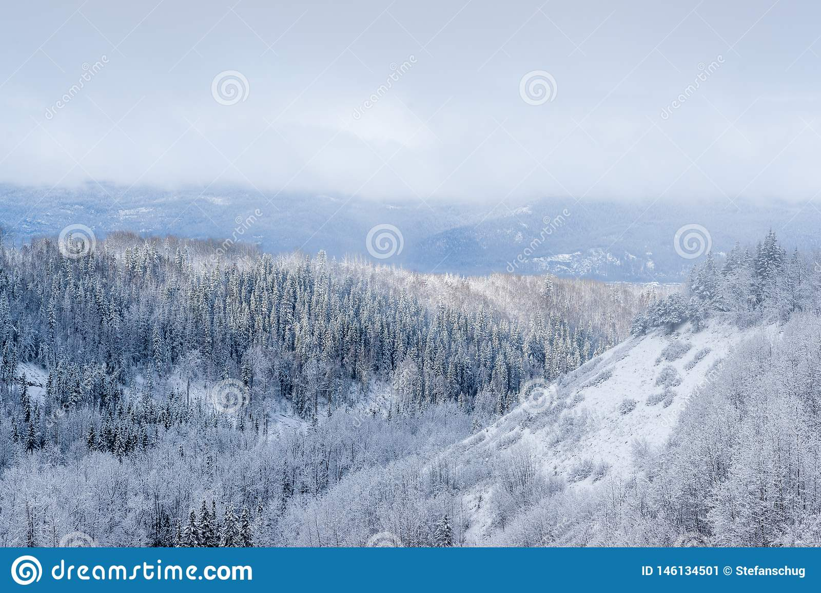 Canadian Wilderness with Mixed Forest - Snow Covered