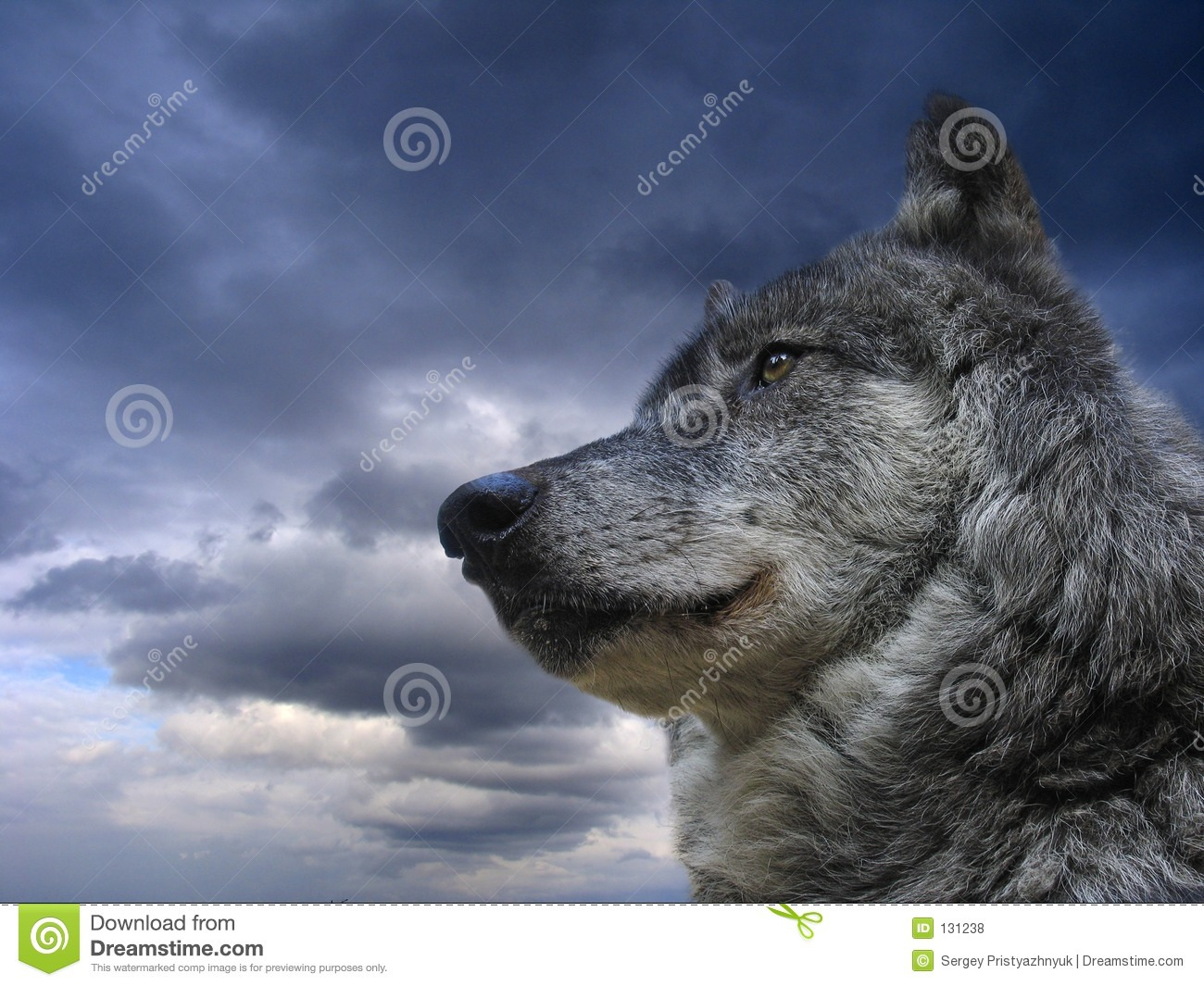 Canadian Wolf