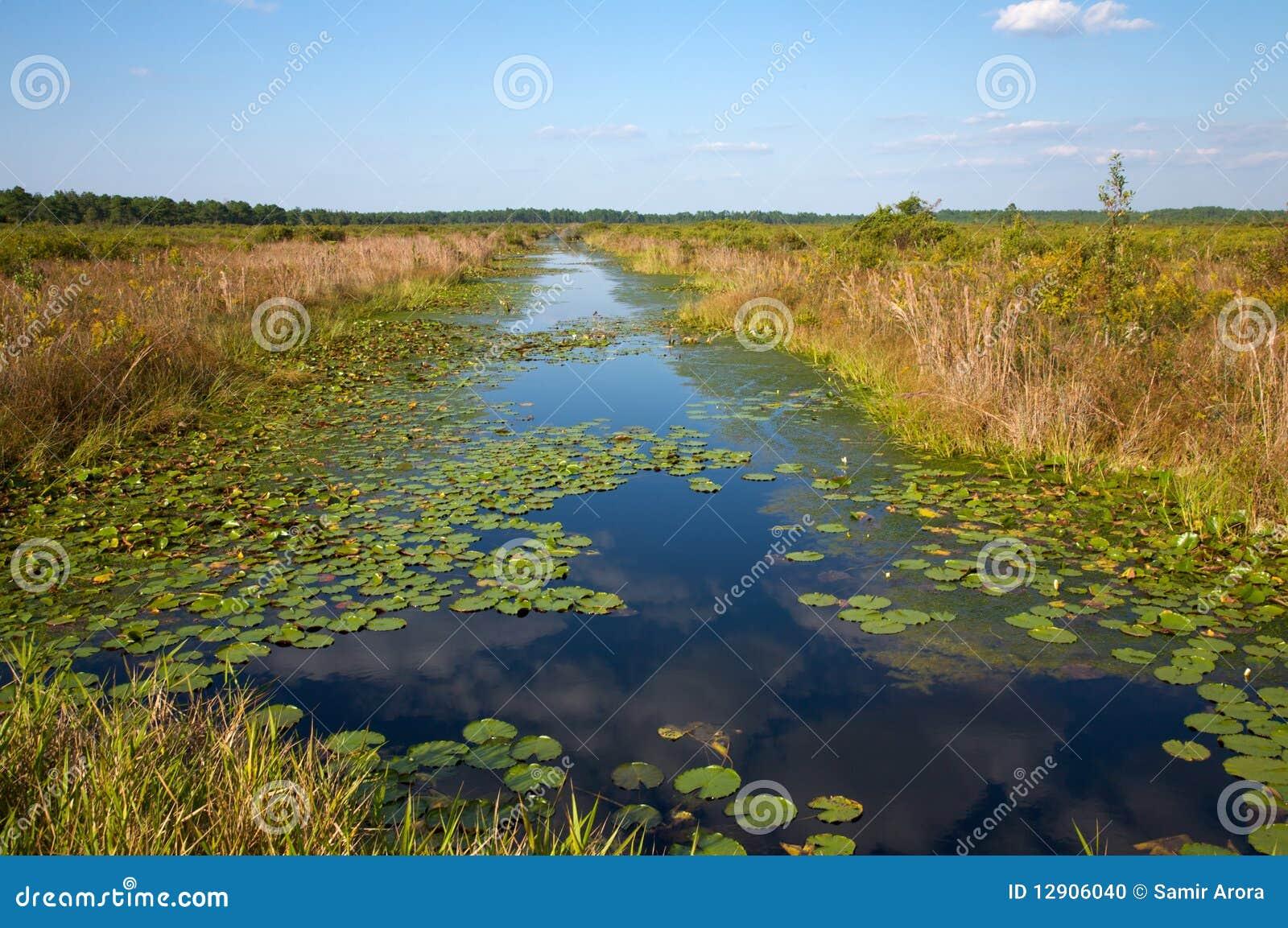 Canal d évacuation avec des waterlilies, la Caroline du Nord