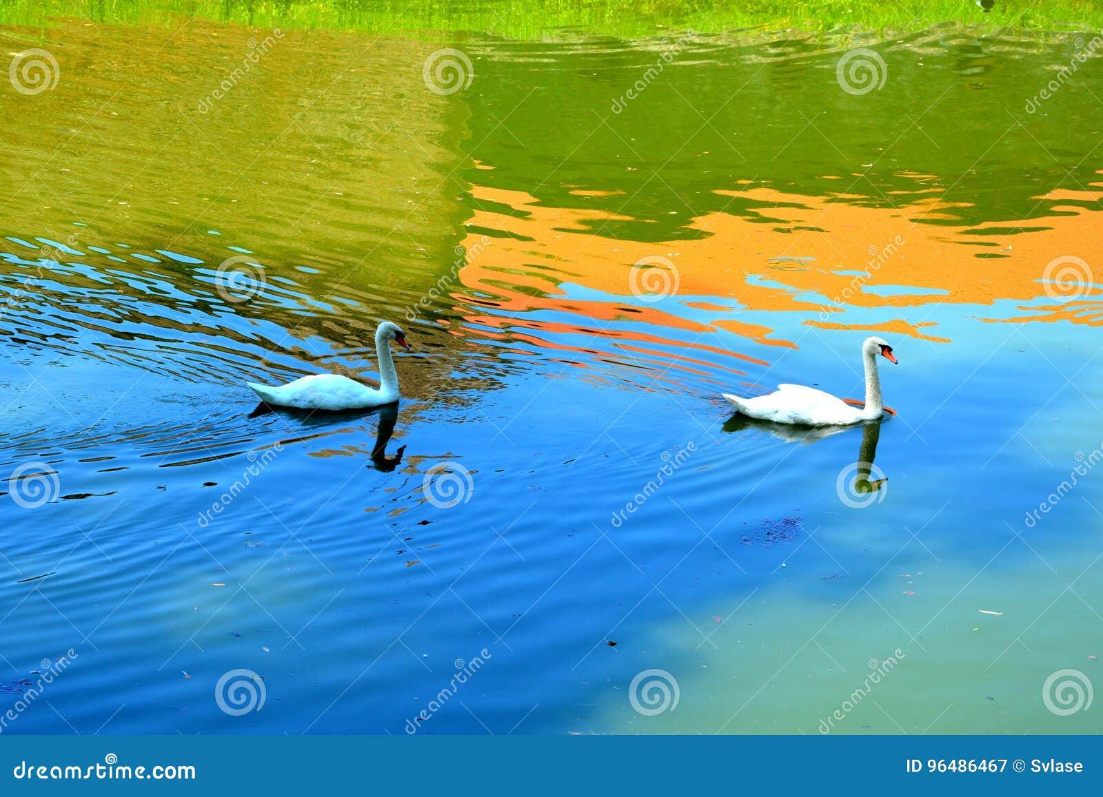 Canal de los cisnes y de agua en la fortaleza medieval vieja de la ciudad Fagaras, condado de Brasov