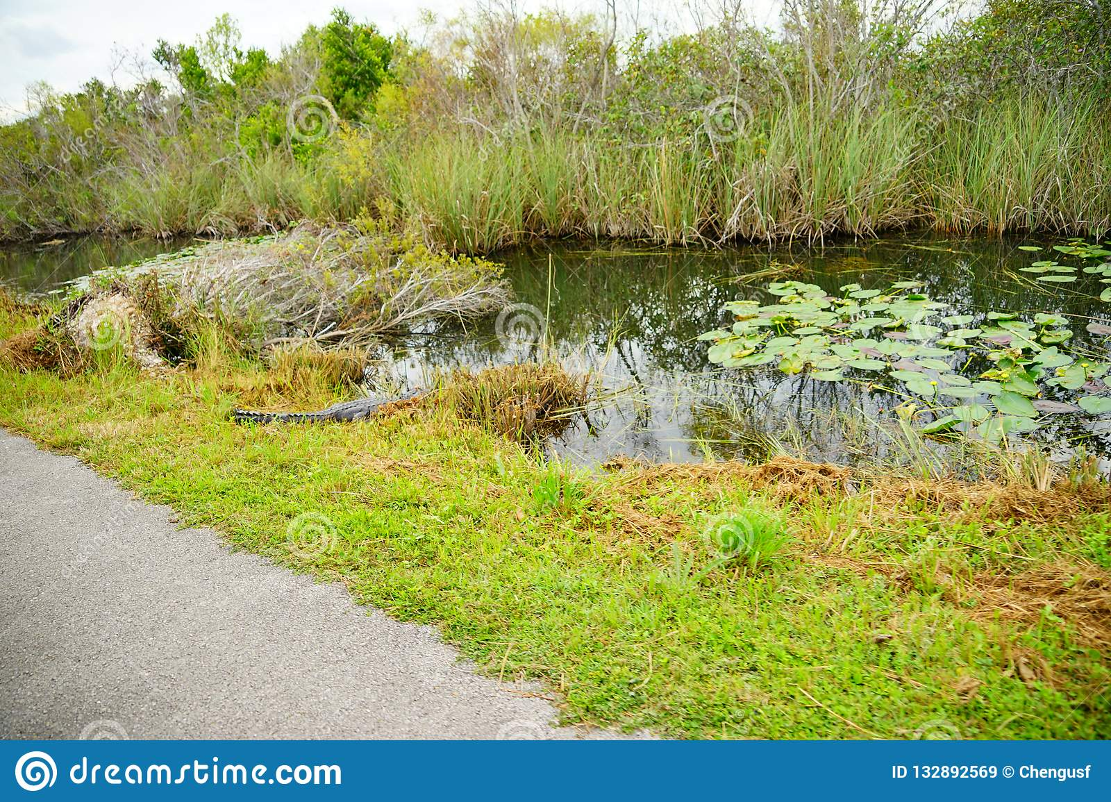 Canal in everglades national park