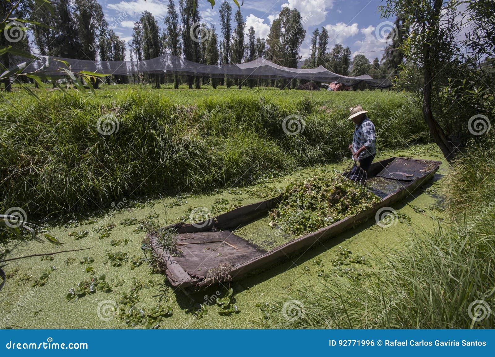 Canaletas de Xochimilco