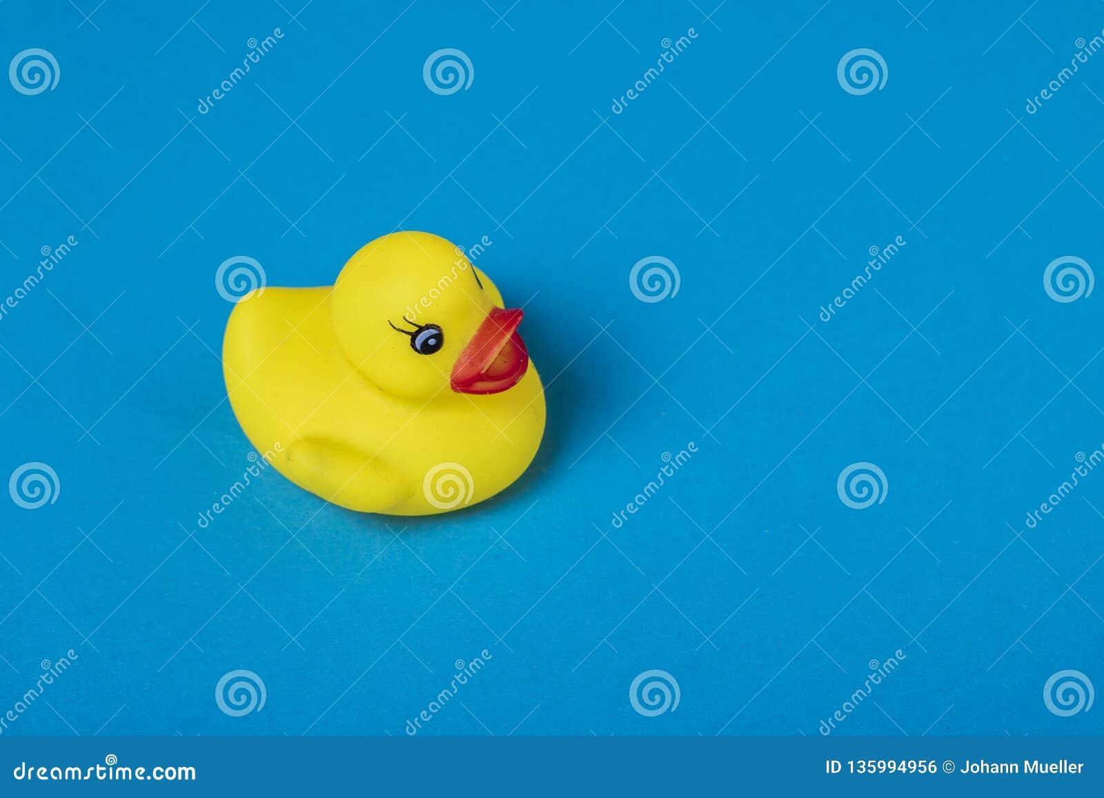 Canard en caoutchouc jaune sur le fond bleu