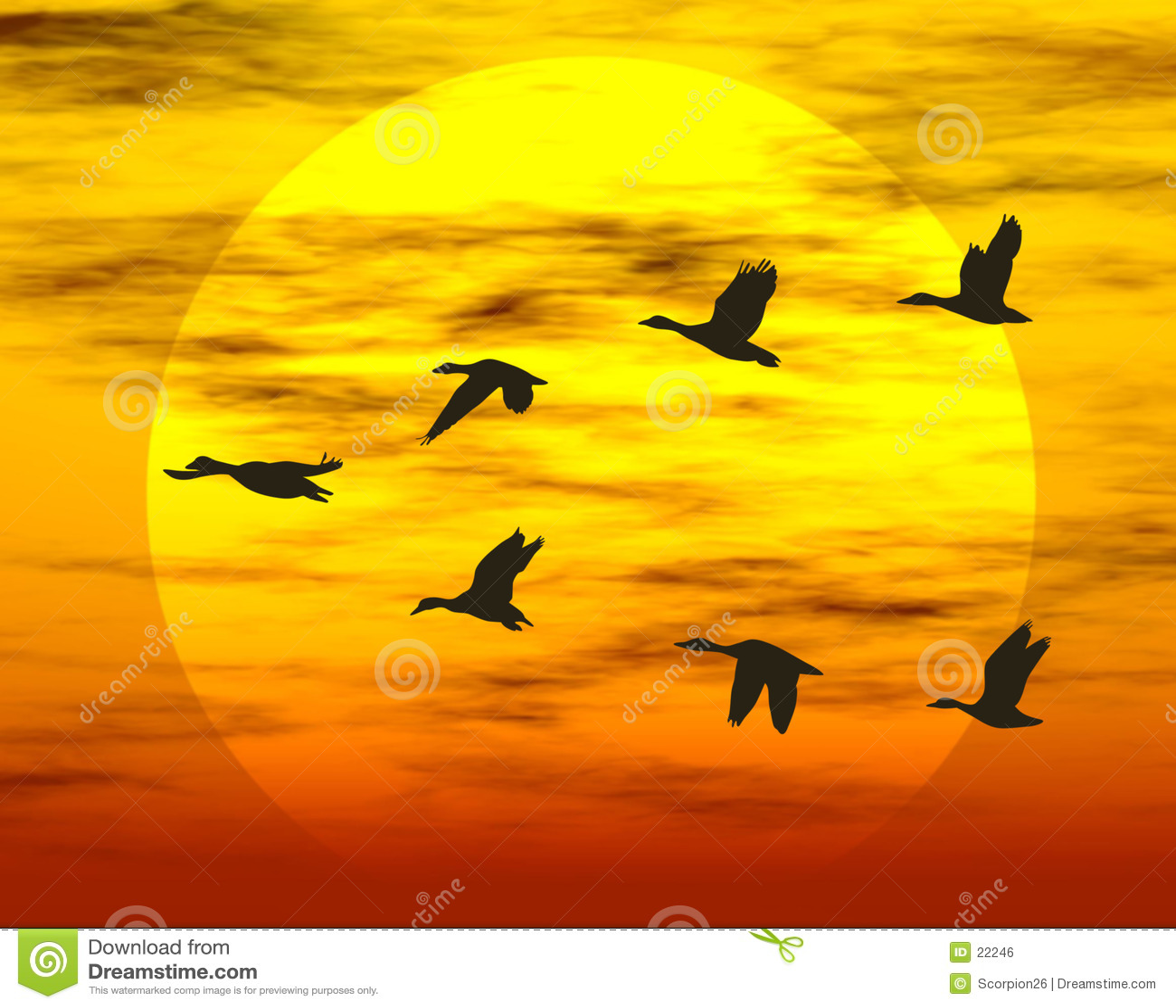 Canards de vol