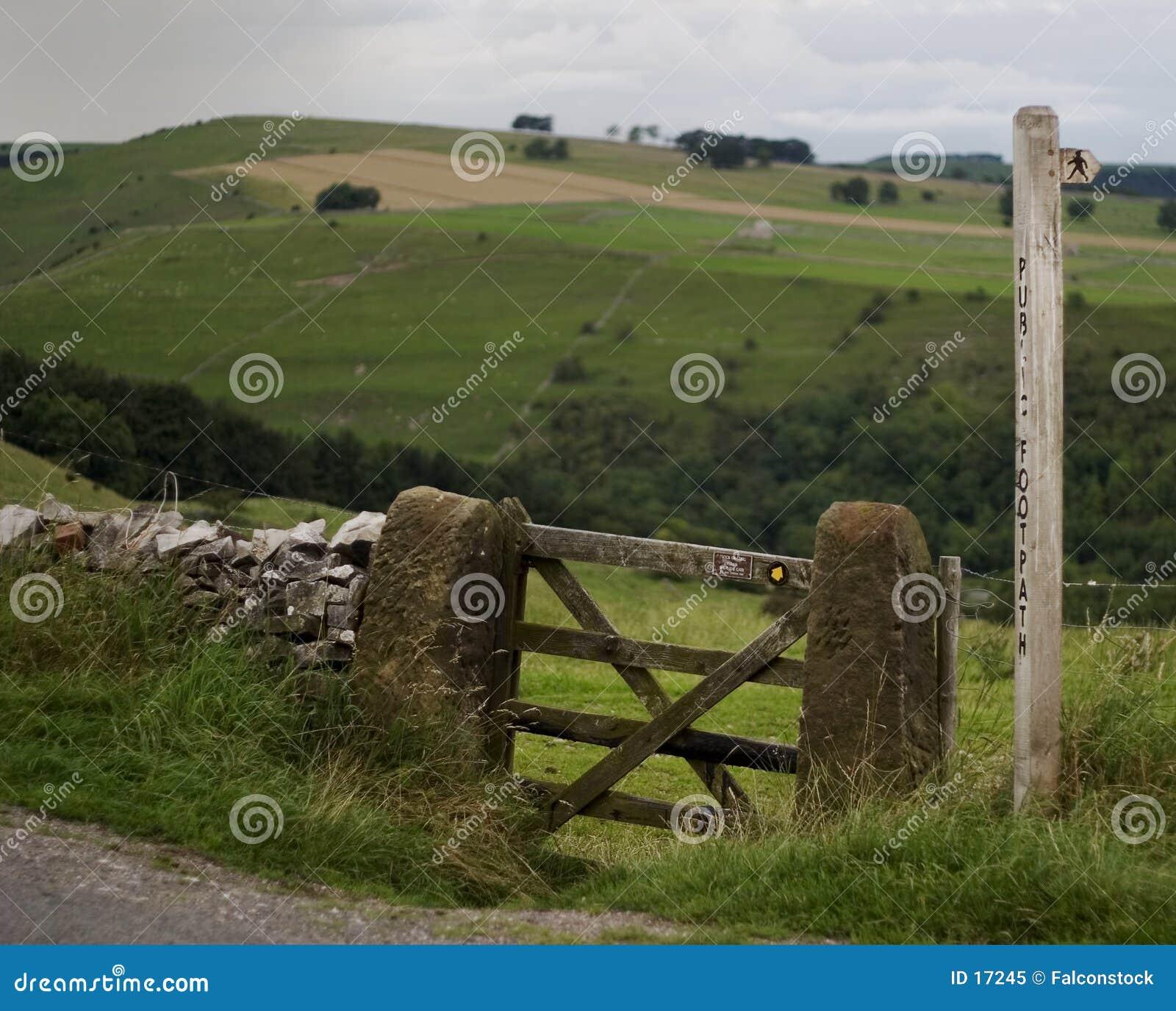 Cancello & alberino