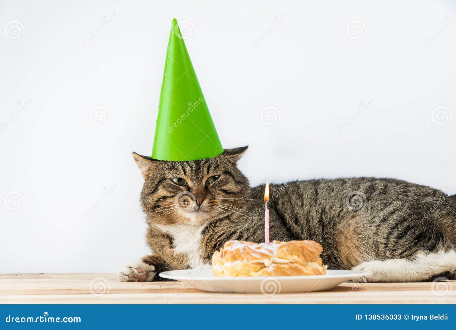 Candela della torta di compleanno del gatto Compleanno del dolce