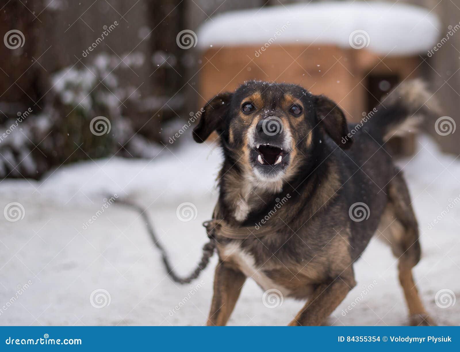 Cane aggressivo e arrabbiato