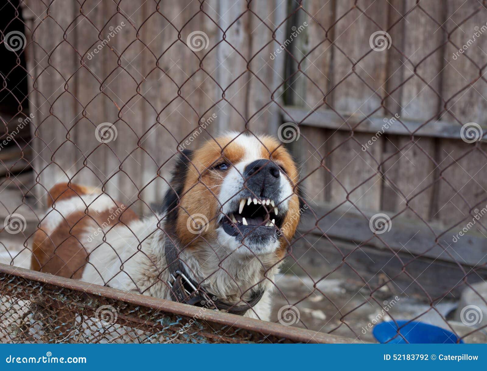 Cane aggressivo in gabbia