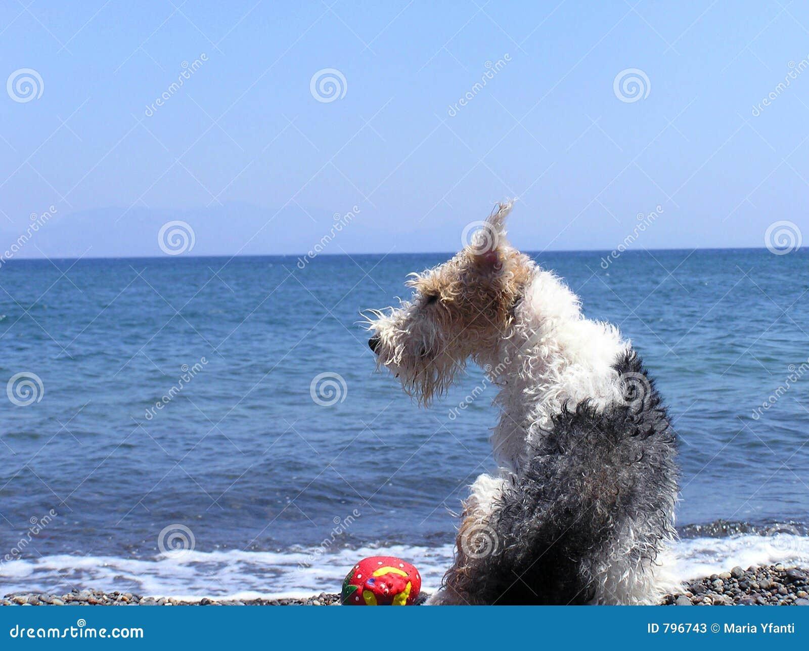 Cane alla spiaggia