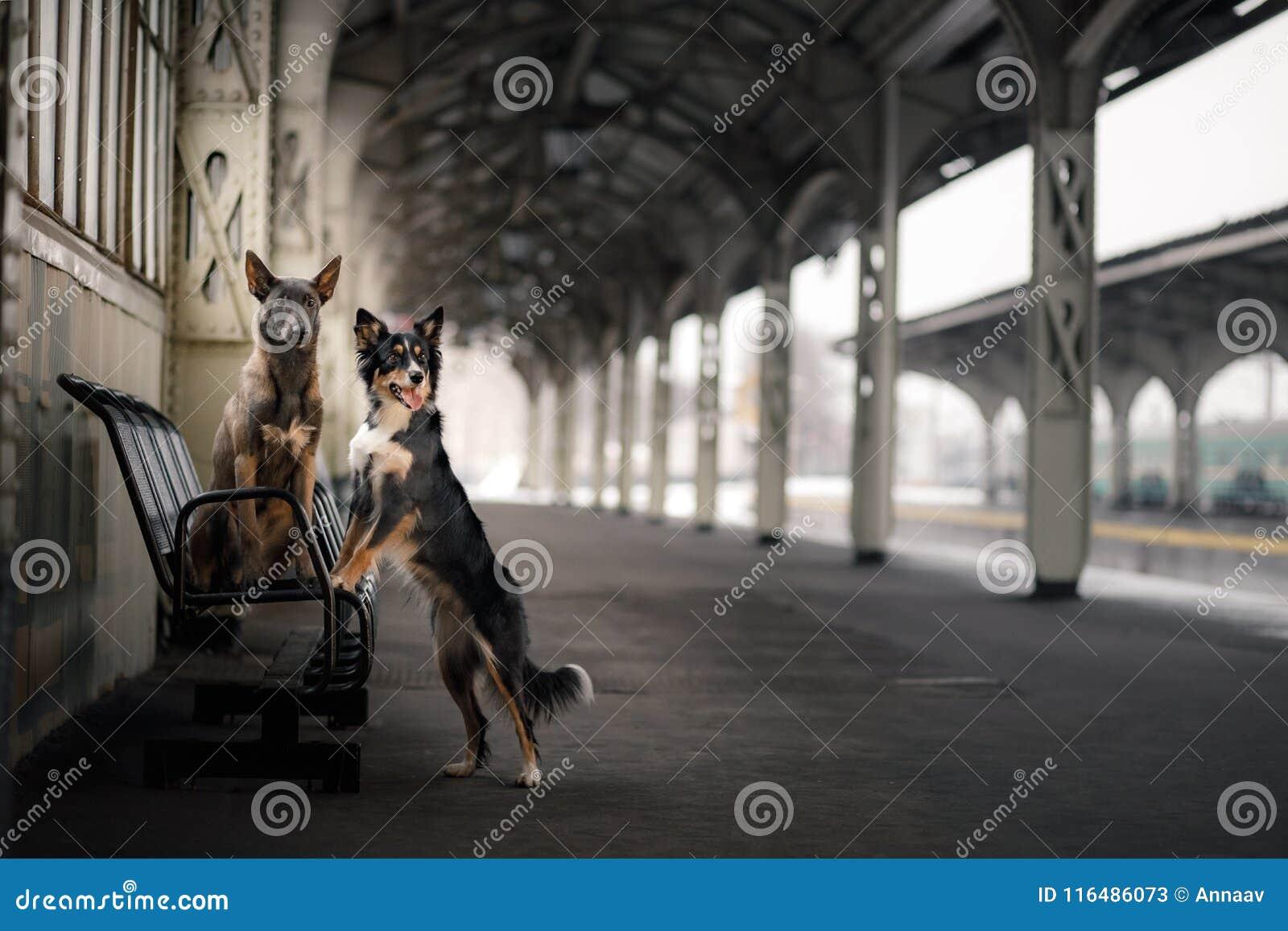 Cane alla stazione ferroviaria Viaggiando con l animale domestico