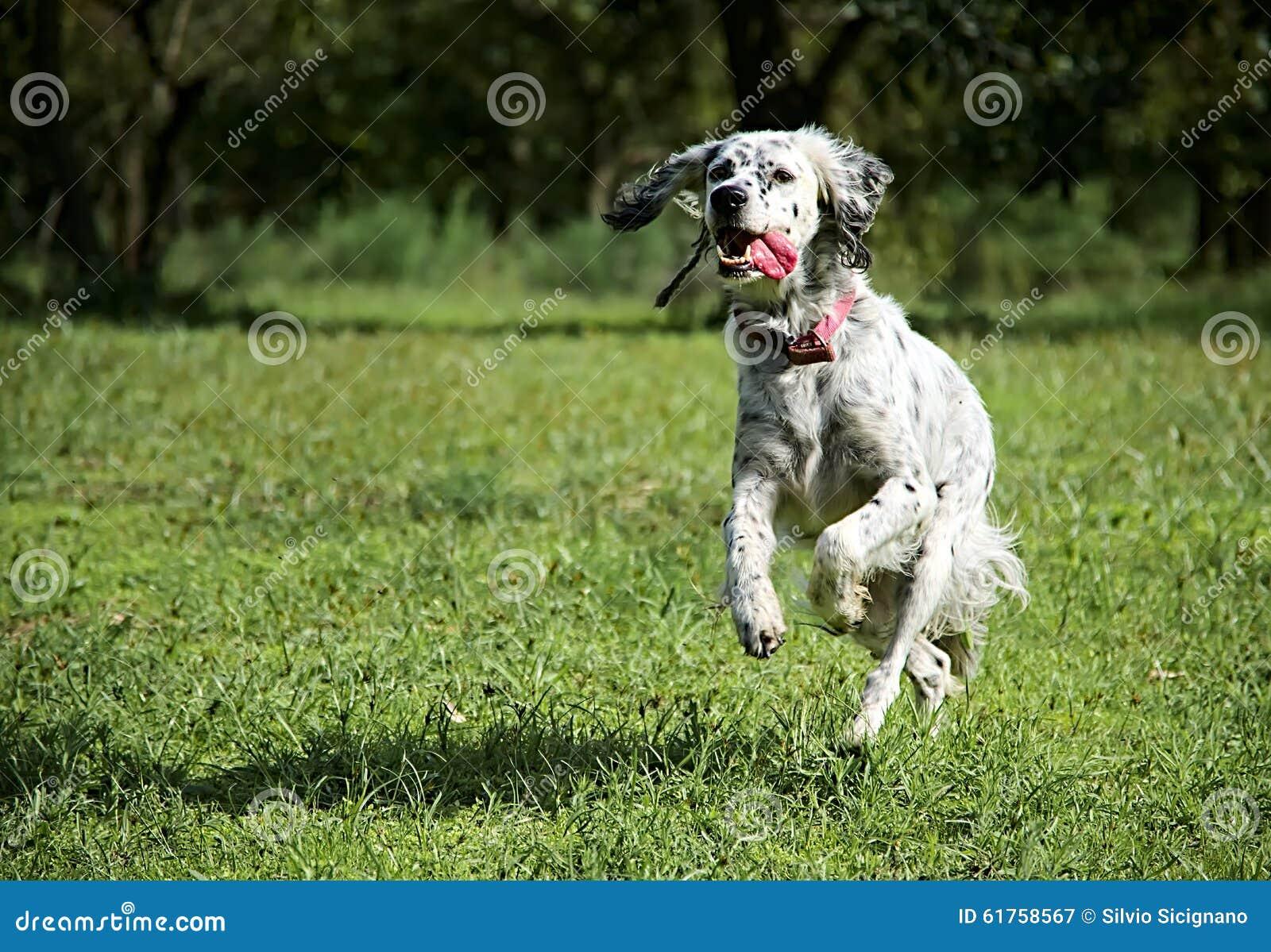 Cane animale domestico funzionamento attivo energia - Animale domestico da colorare pagine gratis ...