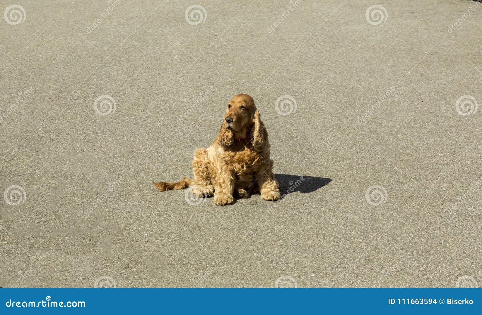 Cane che aspetta sulla via