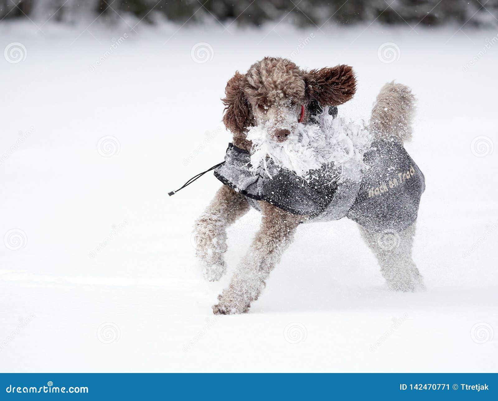 Cane che esegue e che gode della neve un bello giorno di inverno