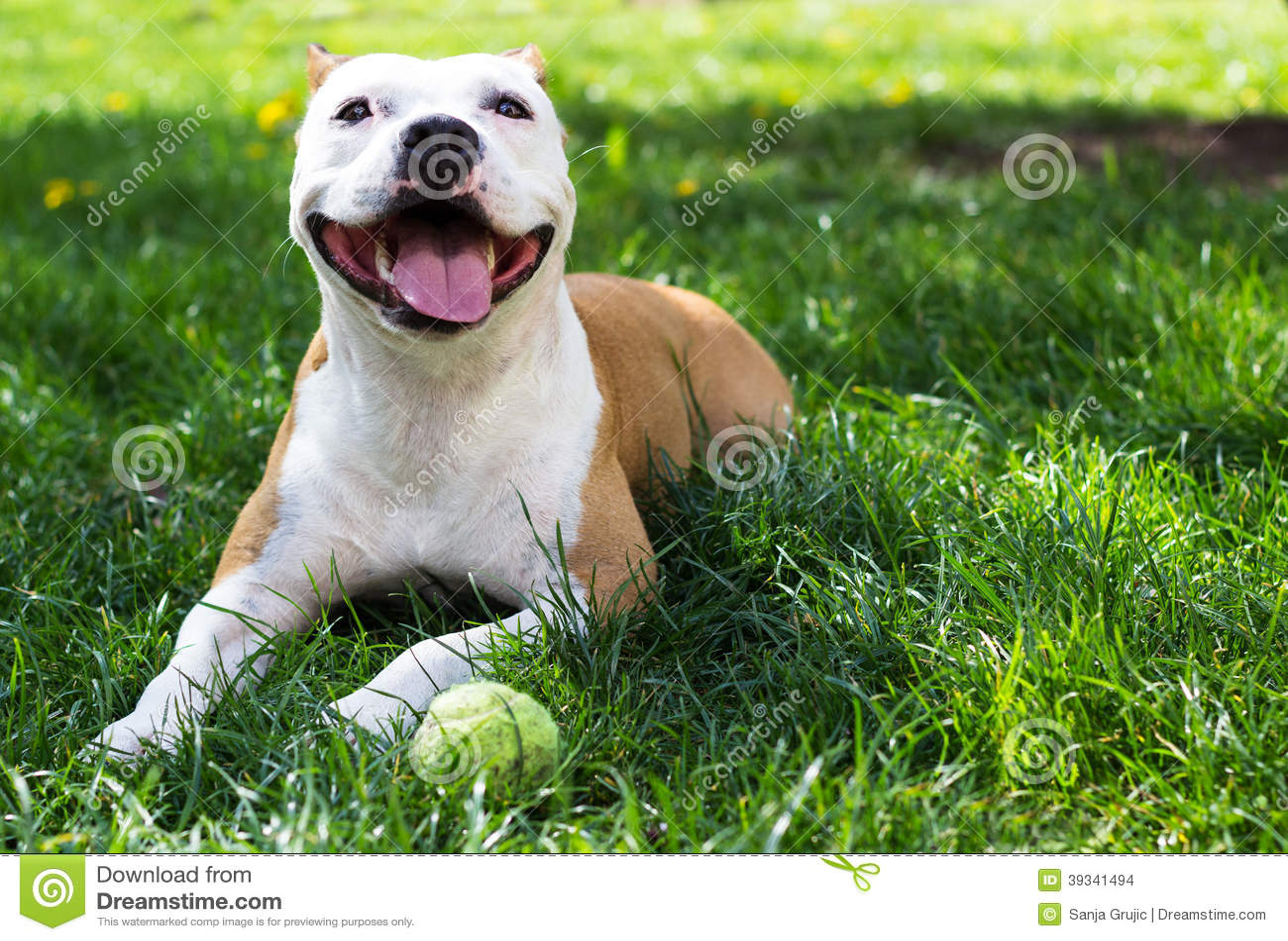 Cane che gioca con una palla