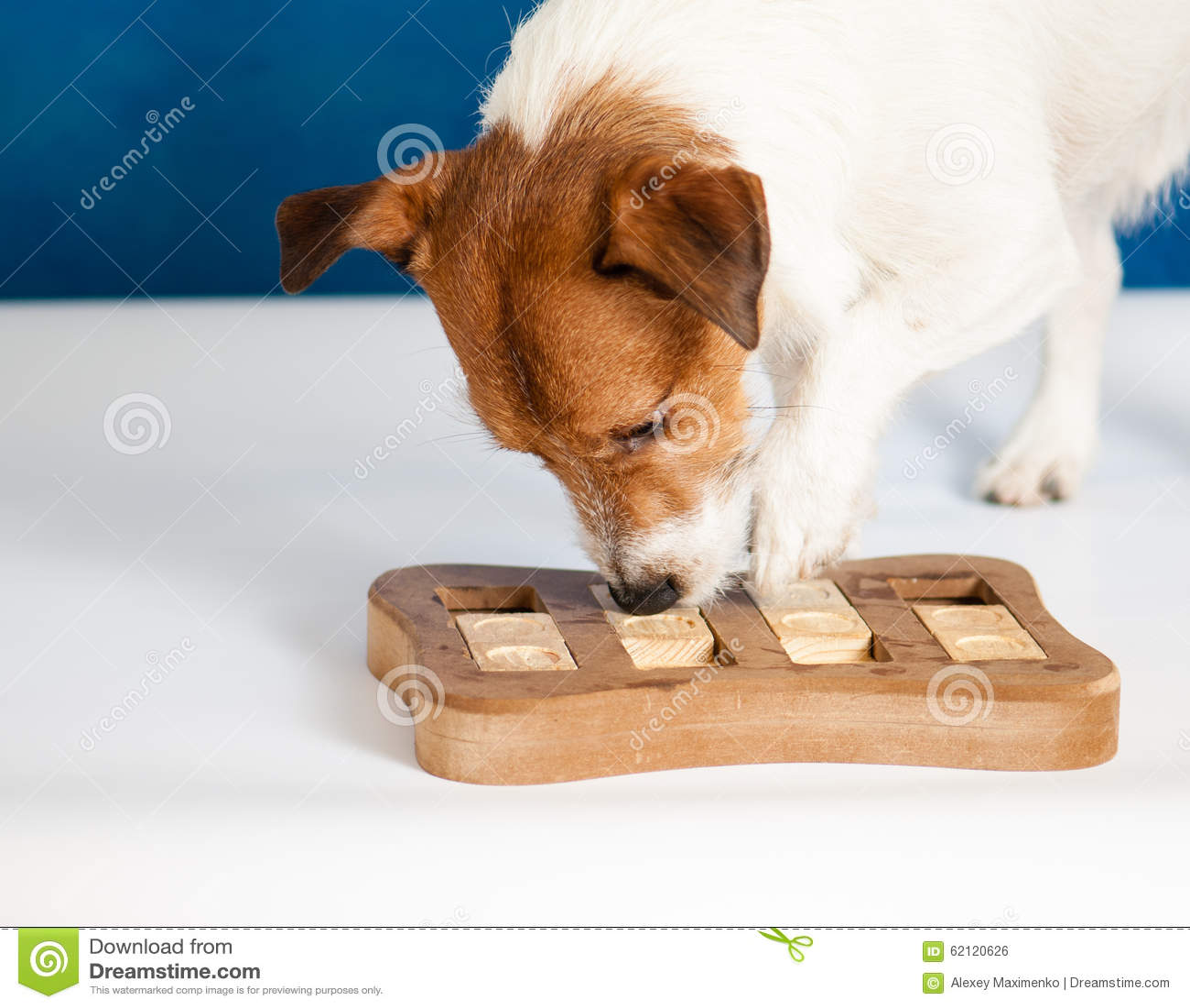 Cane che gioca gioco intellettuale