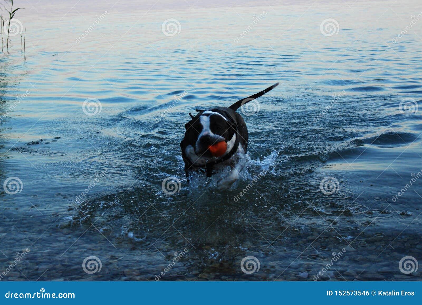 Cane che gode del bagno