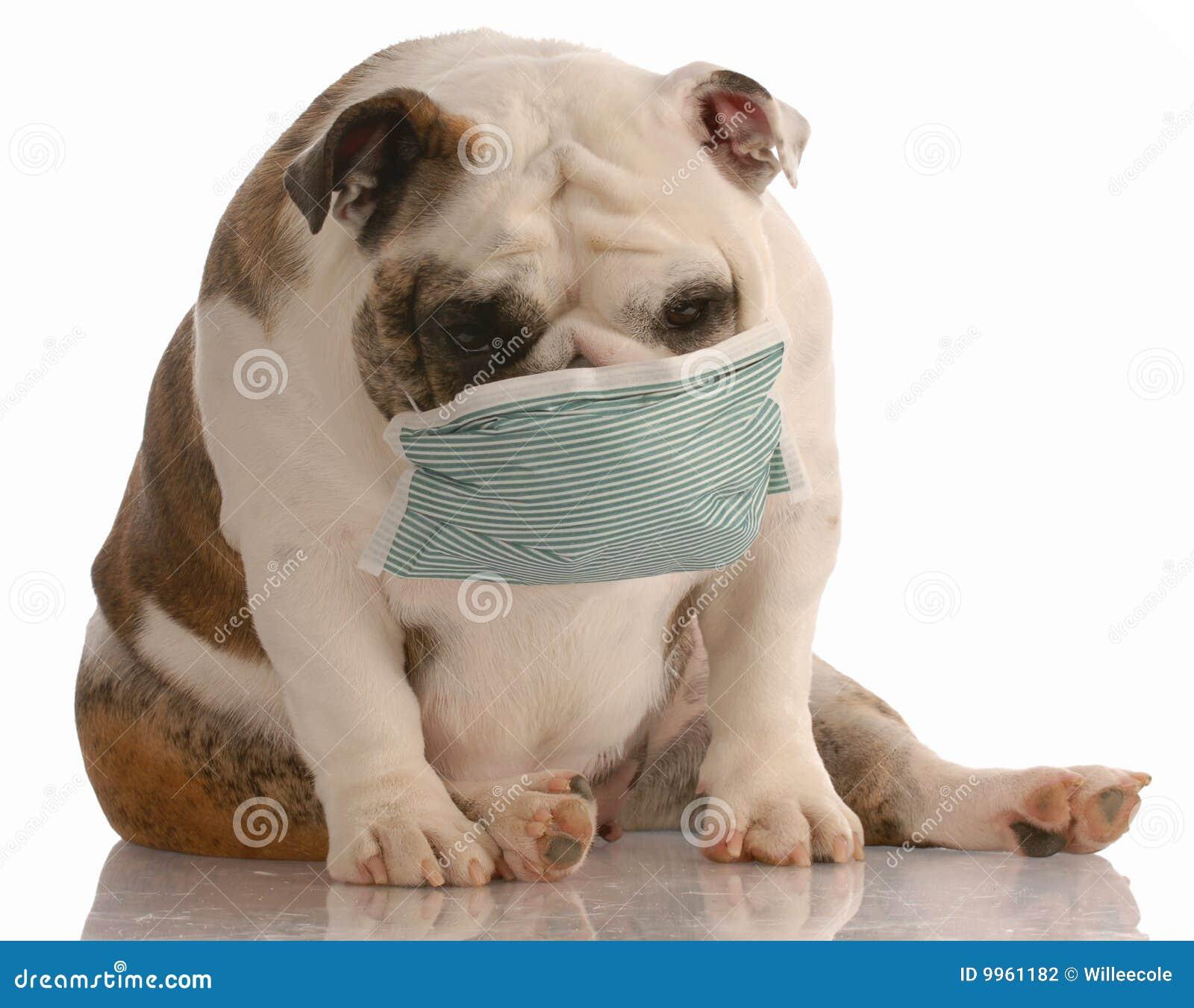 Cane che porta mascherina medica fotografia stock - Zanzibar medicine da portare ...