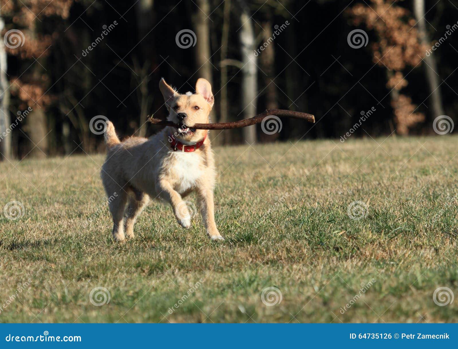 Cane che recupera un bastone