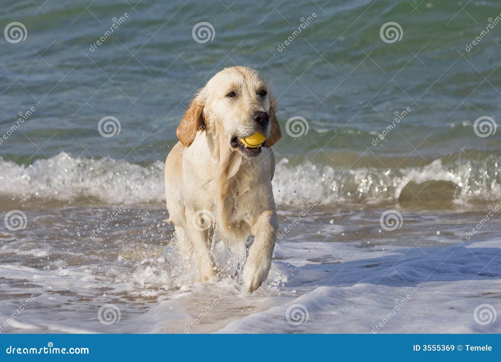 Cane che richiama una sfera