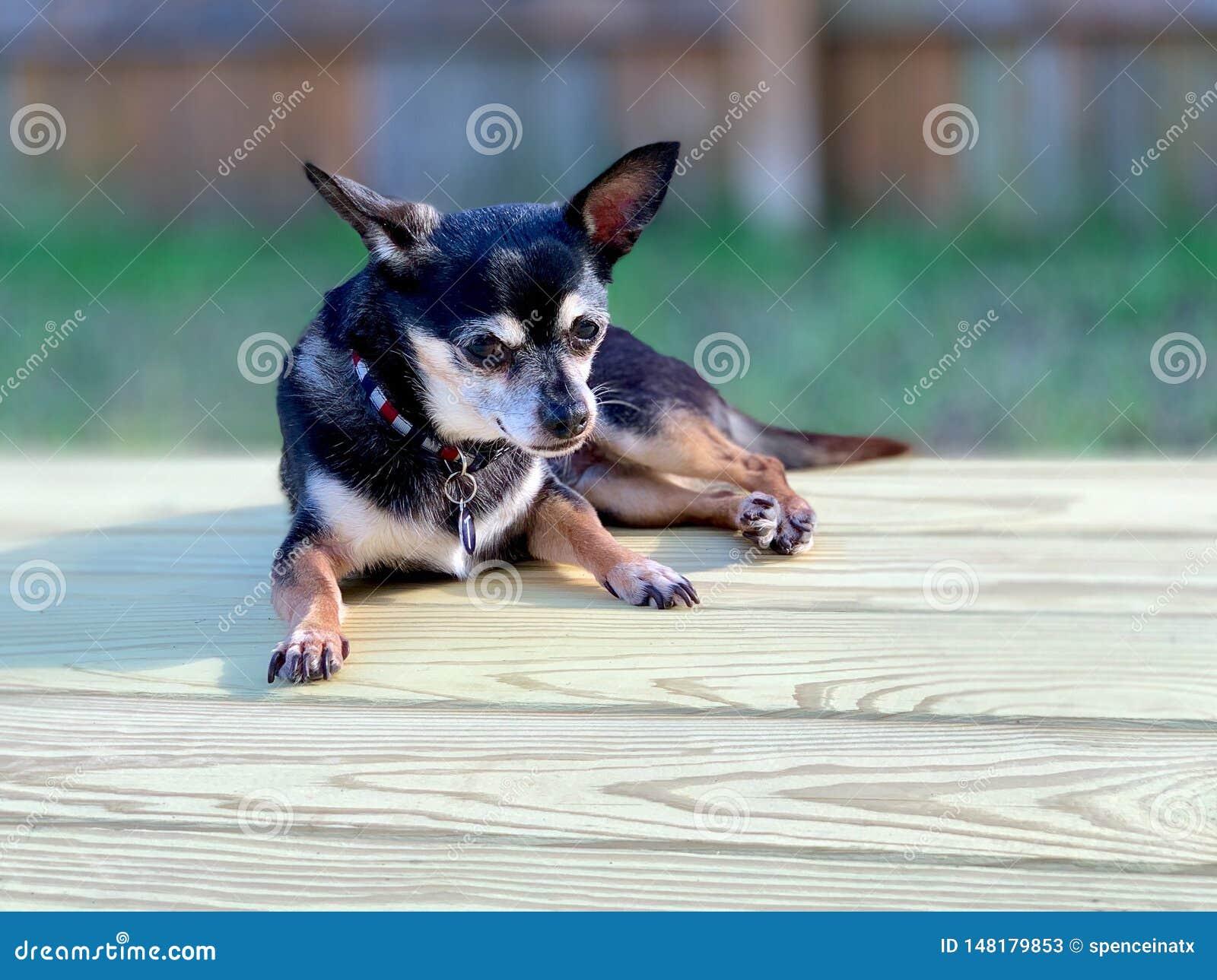 Cane che si rilassa su una piattaforma
