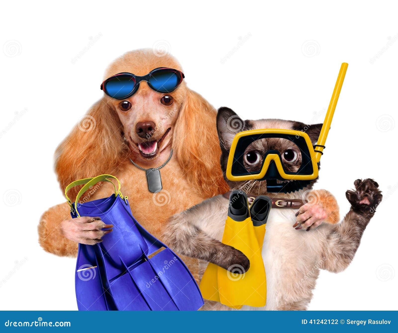 Cane con l operatore subacqueo del gatto