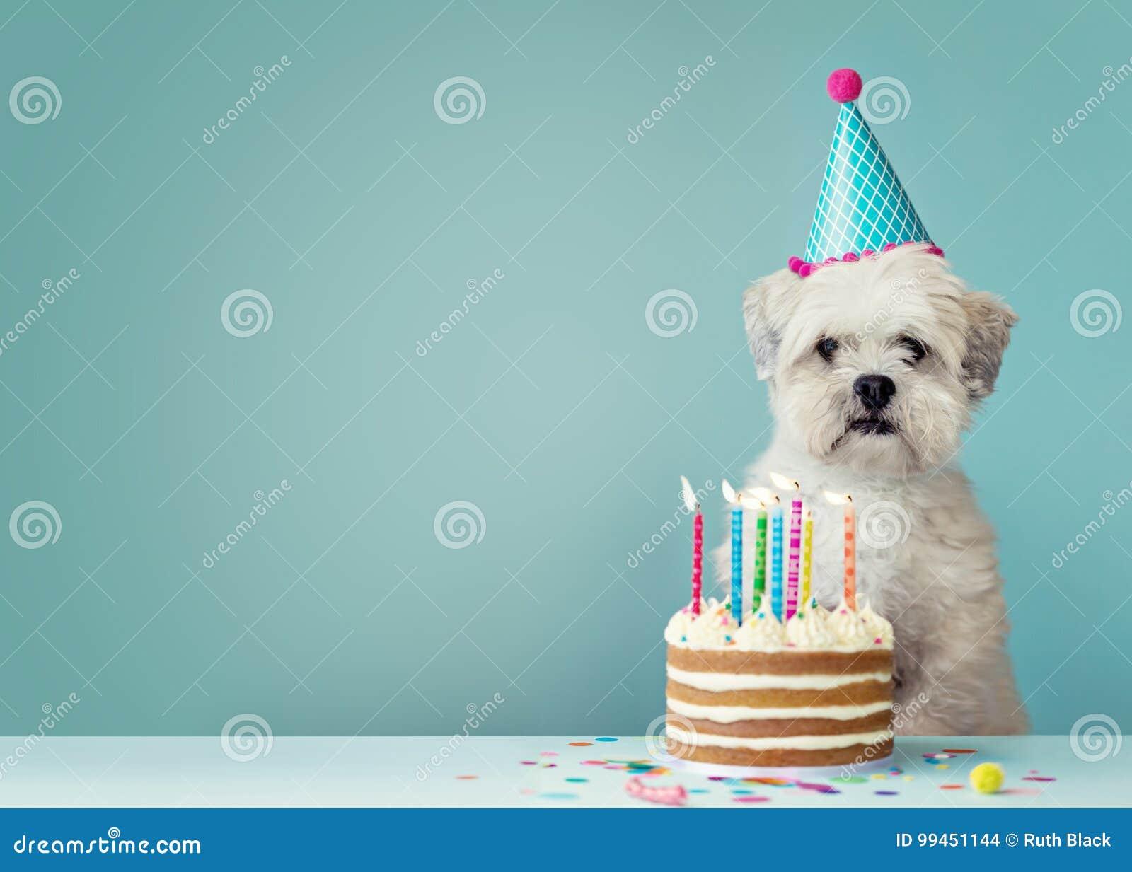 Cane con la torta di compleanno