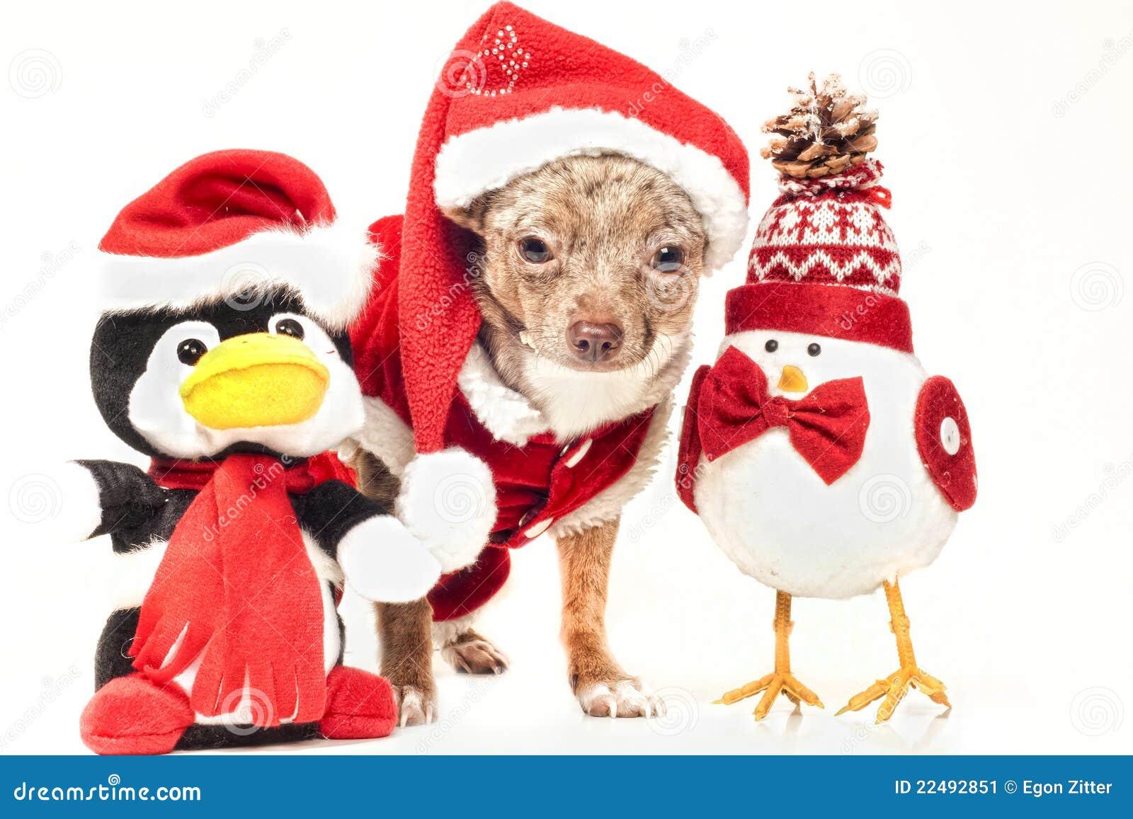 Cane Con Le Figure Di Natale Immagine Stock Immagine Di Bello