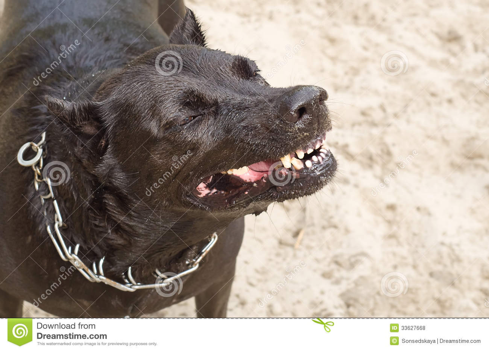 Cane con un ringhio cattivo di sorriso