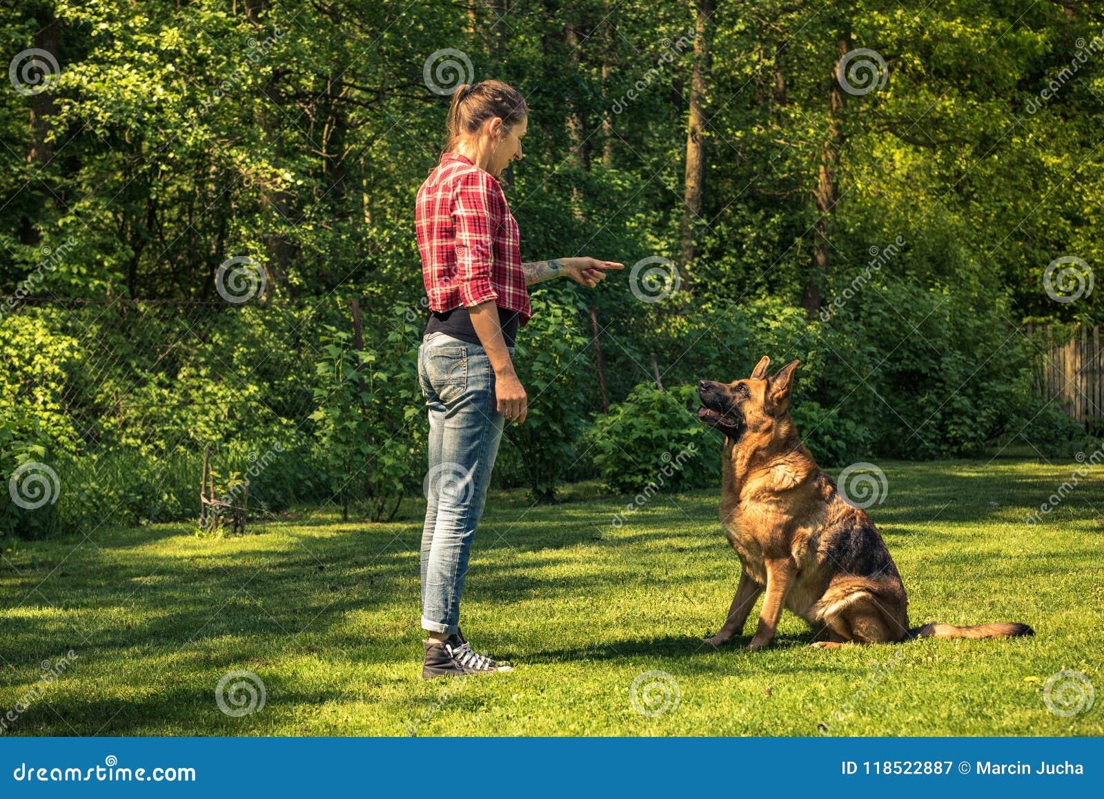 Cane da pastore tedesco del treno della giovane donna da sedersi