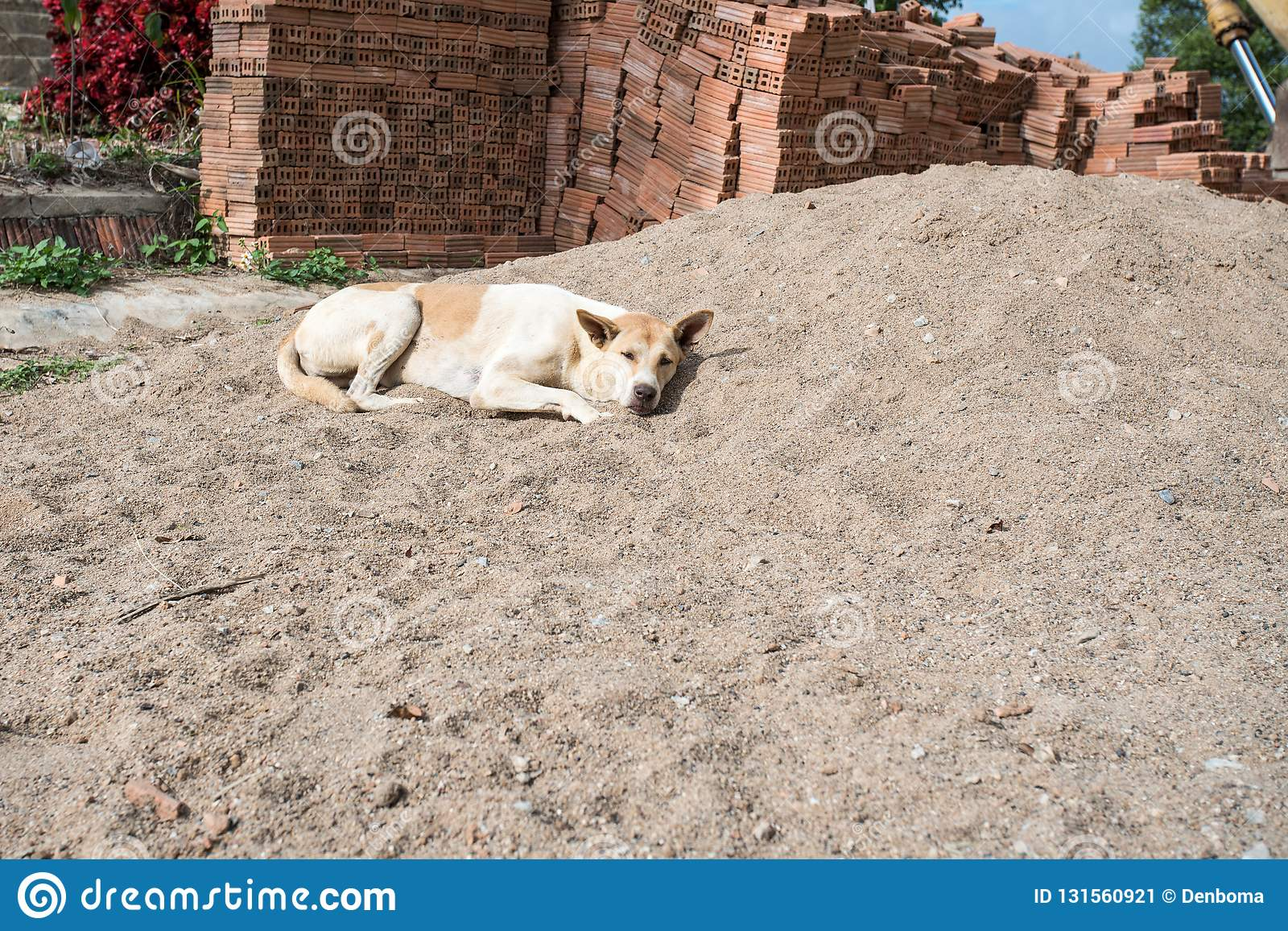 Cane da riposare al sole