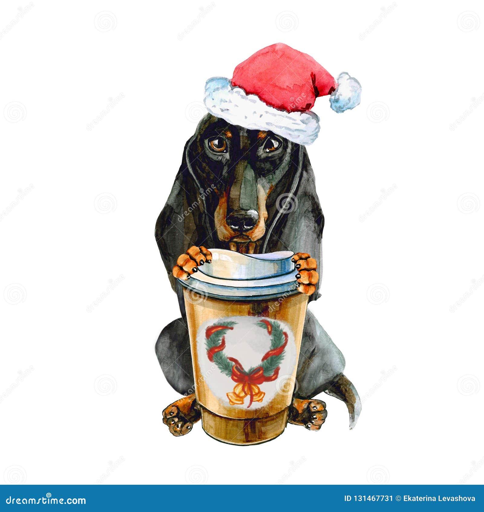Cane del bassotto tedesco in cappello di Santa Claus Christmas, con una tazza di caffè di riscaldamento Isolato su priorità bassa