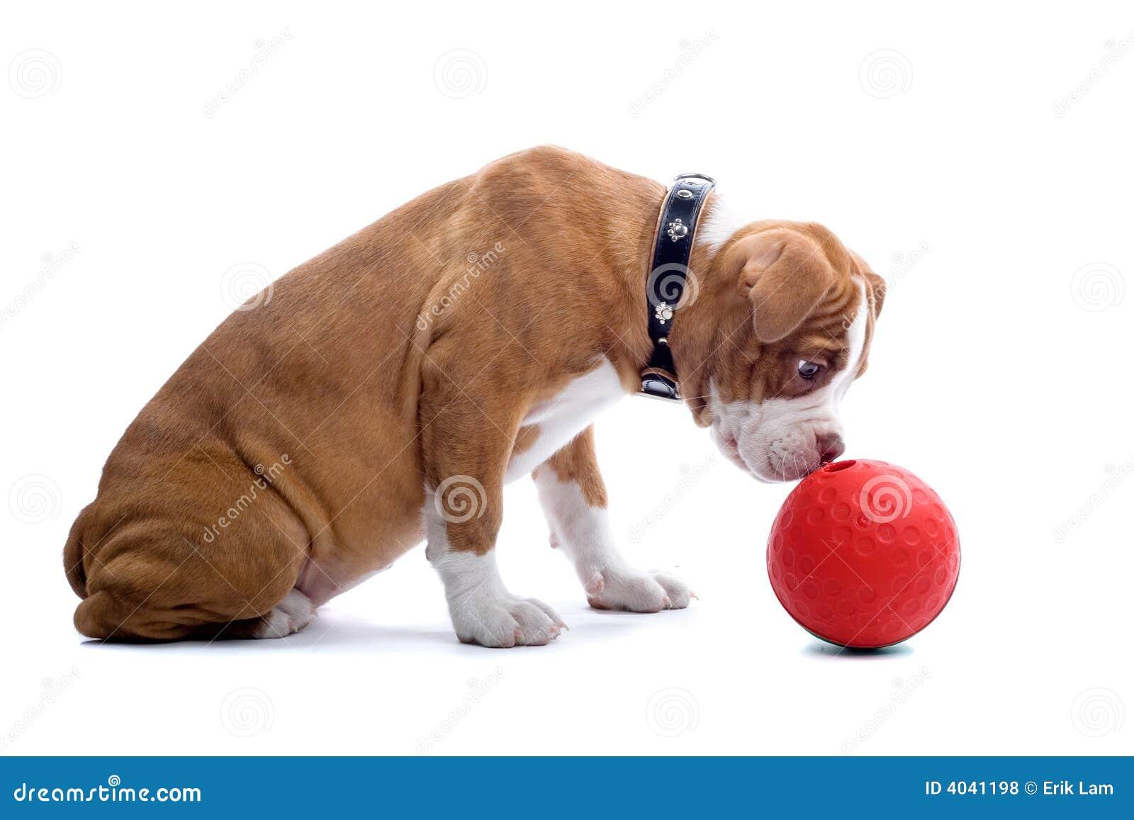 Cane del bulldog di rinascita