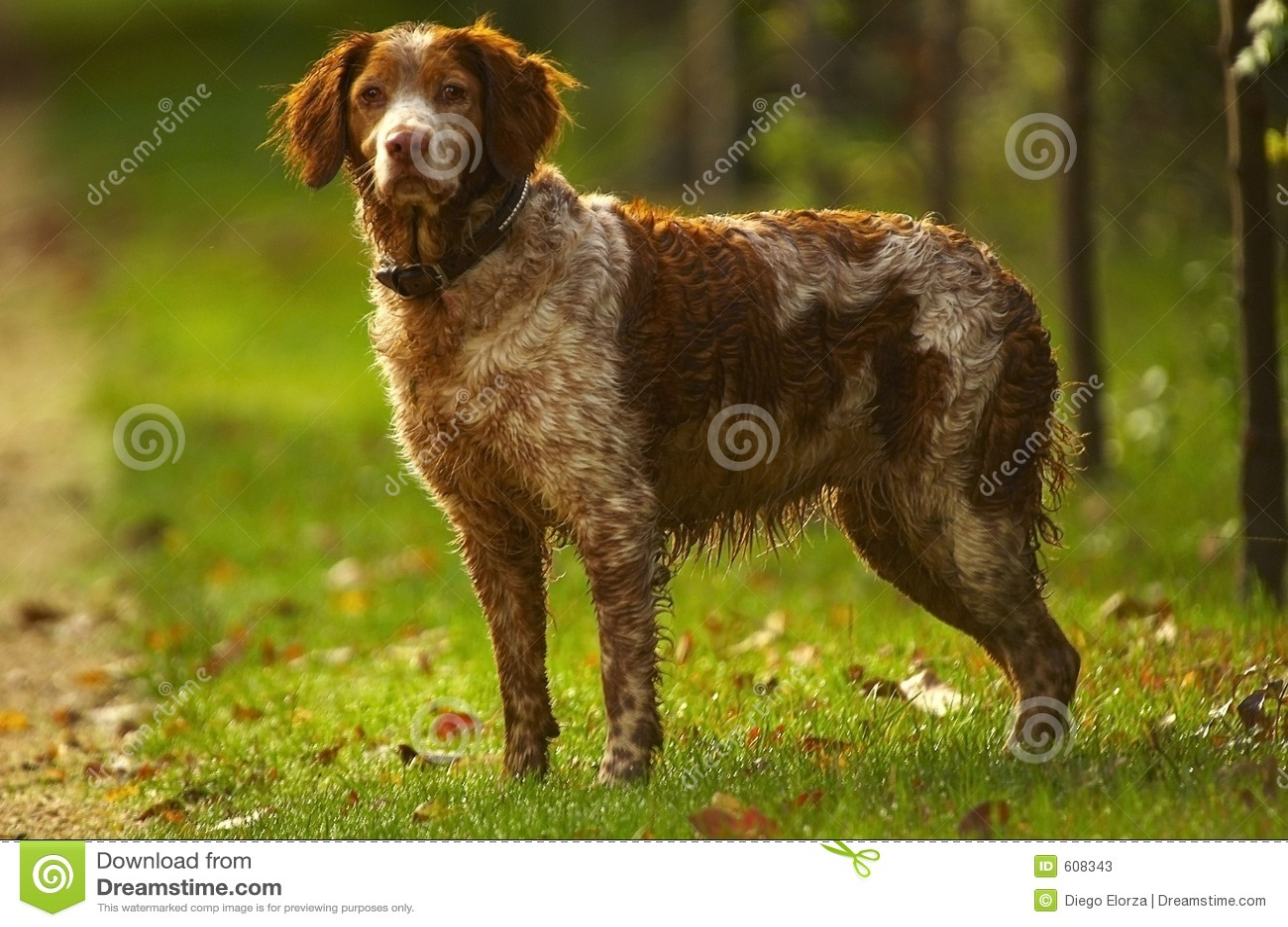 Cane del cacciatore