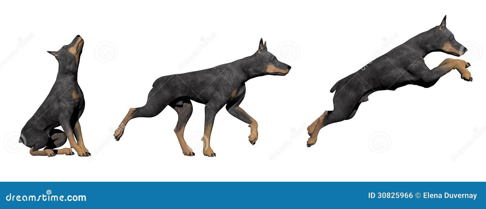 Cane del doberman - 3D rendono