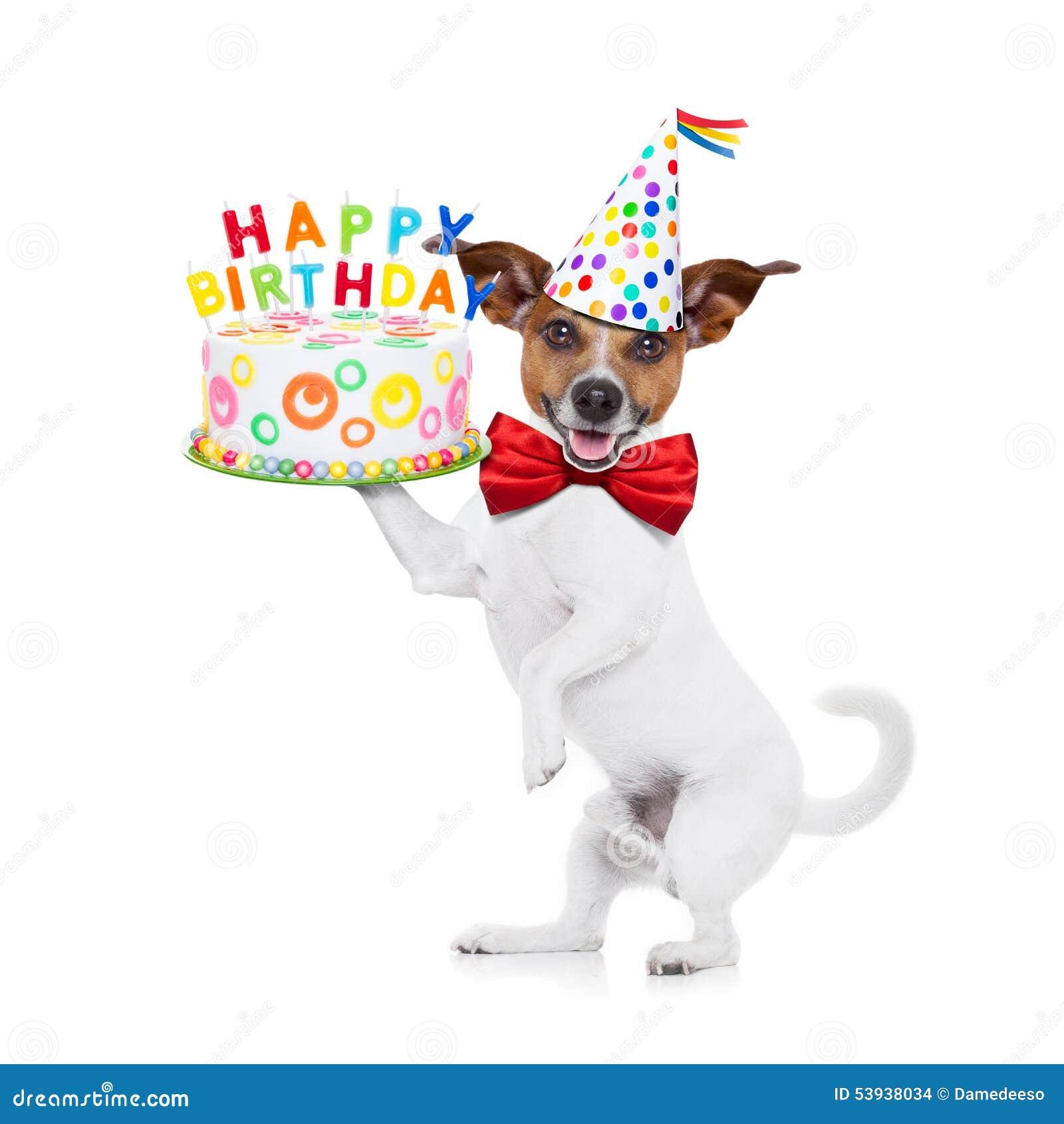 Cane E Dolce Di Buon Compleanno Immagine Stock Immagine Di Celebri