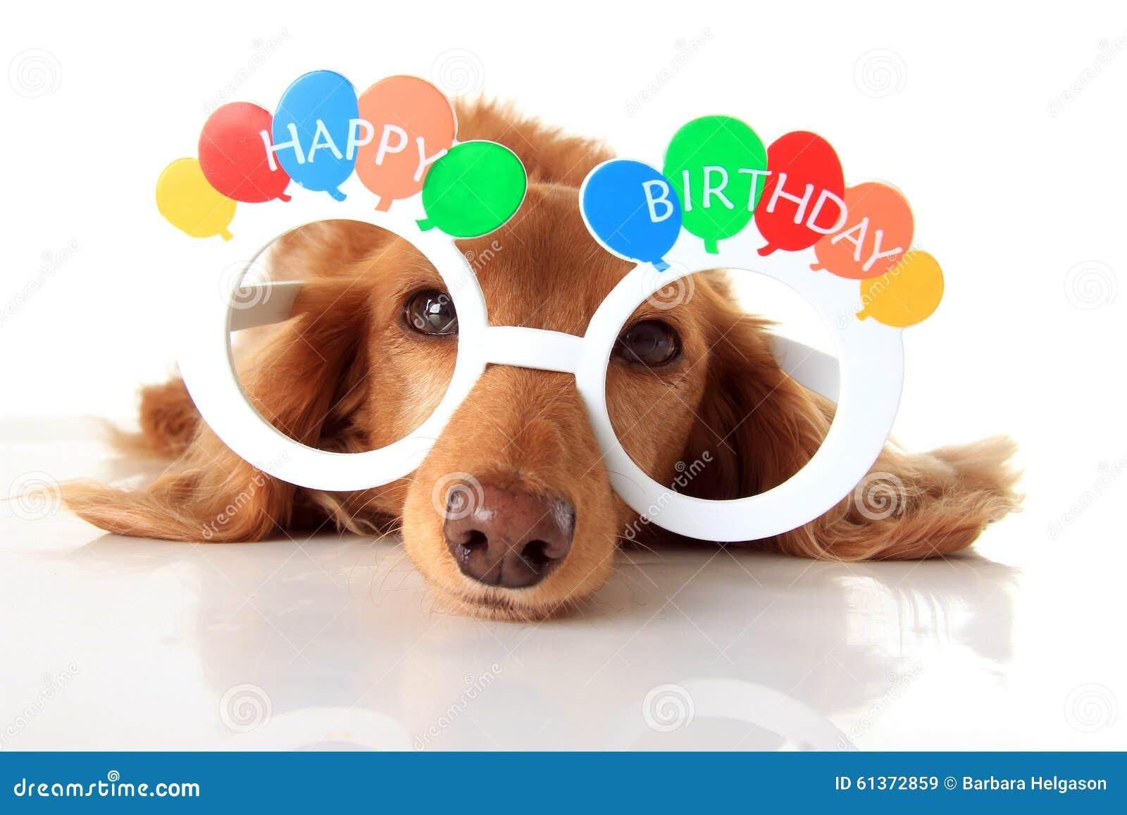 Cane Di Buon Compleanno Immagine Stock Immagine Di Accessorio